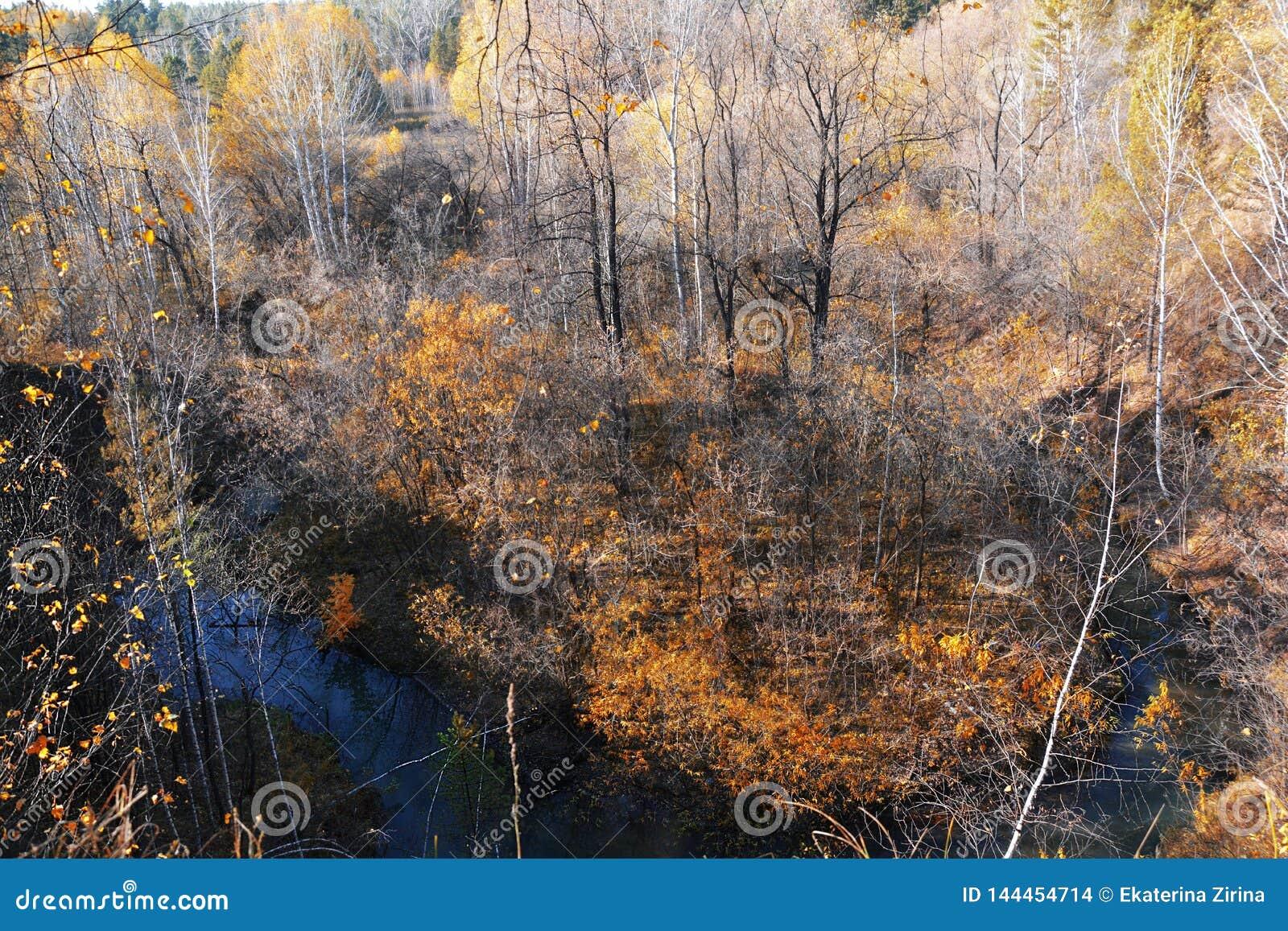 Roter Wald des Herbstes und kleines Flussfotobild