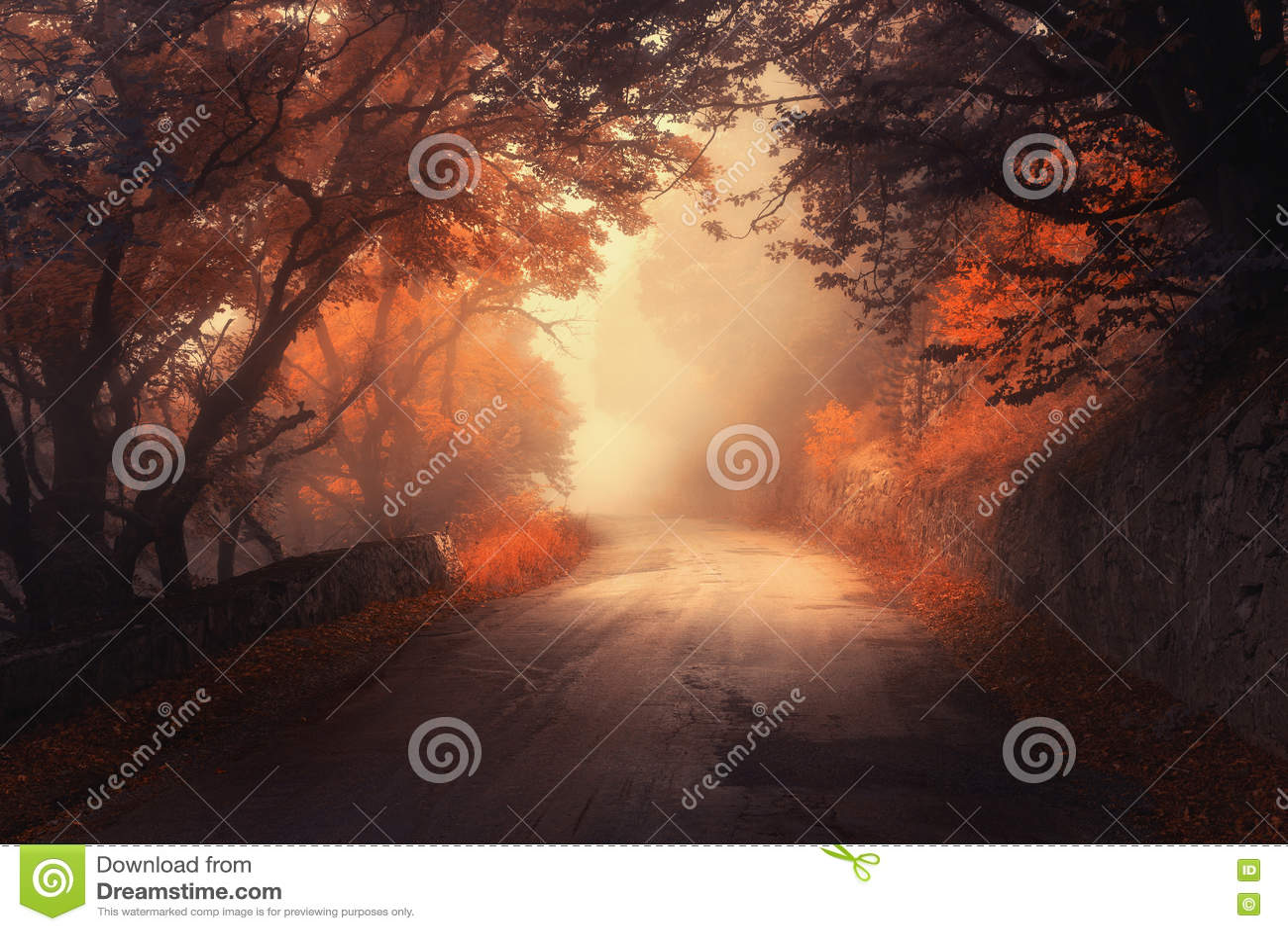 Roter Wald des mystischen Herbstes mit Straße im Nebel