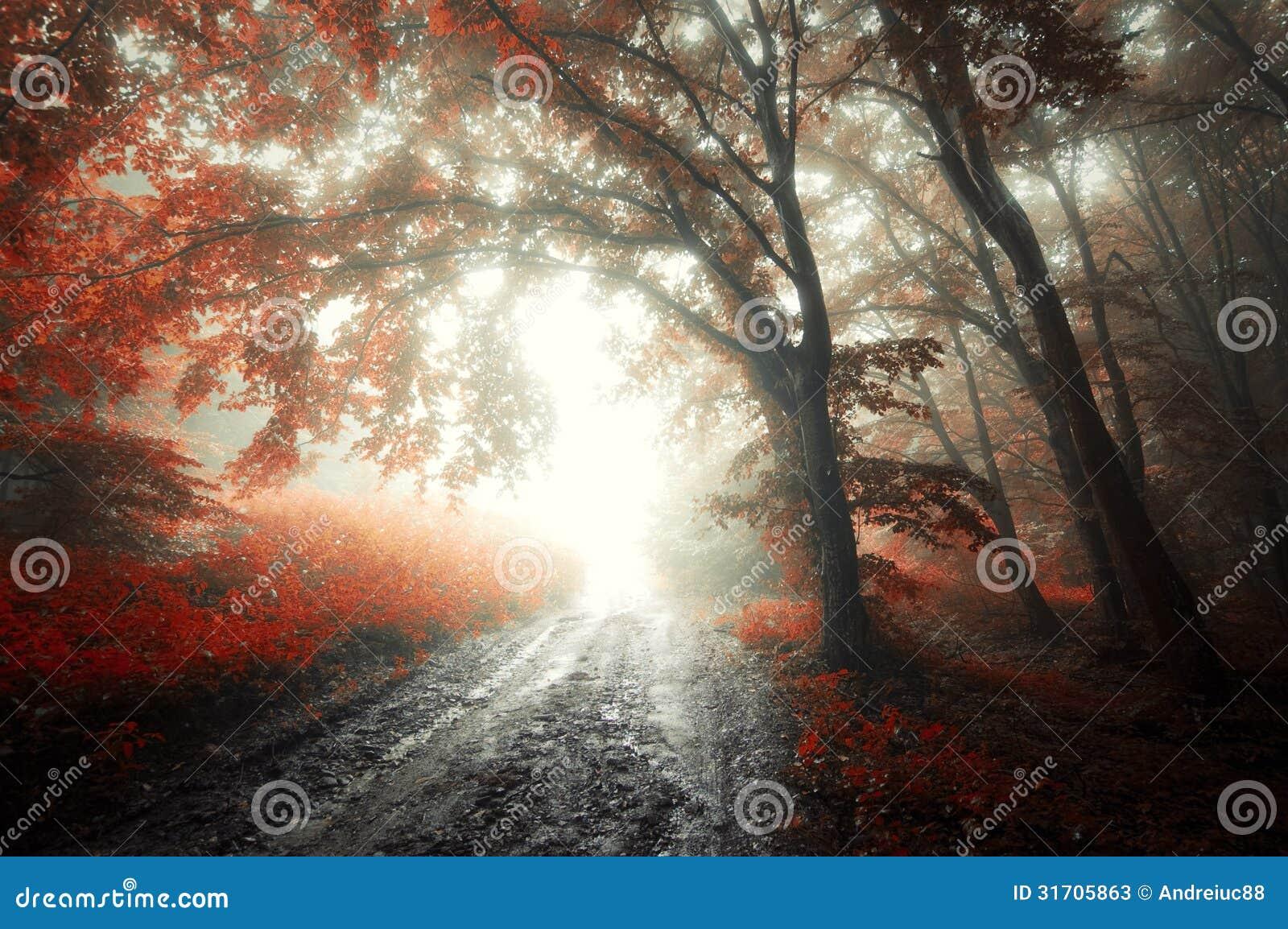 Roter Wald mit Nebel im Herbst