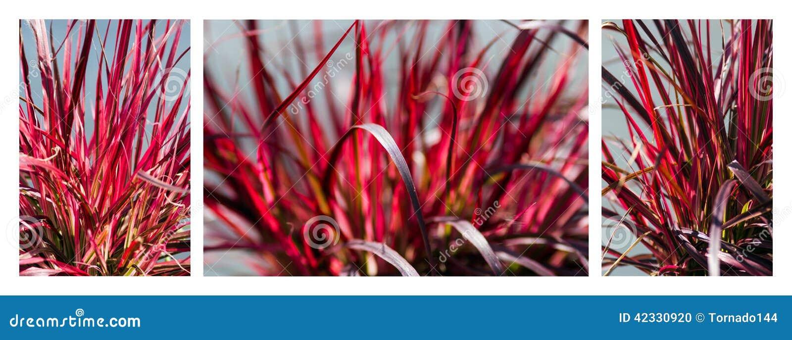 rotes gras trio stockfoto bild 42330920