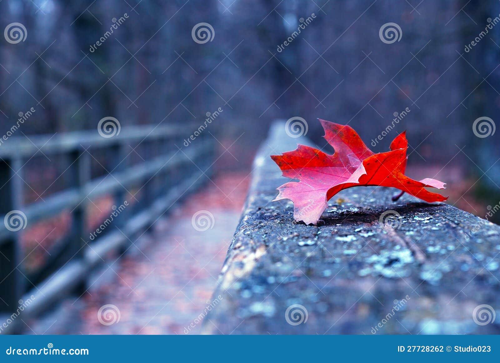 Rotes Herbstblatt auf alter hölzerner Brücke