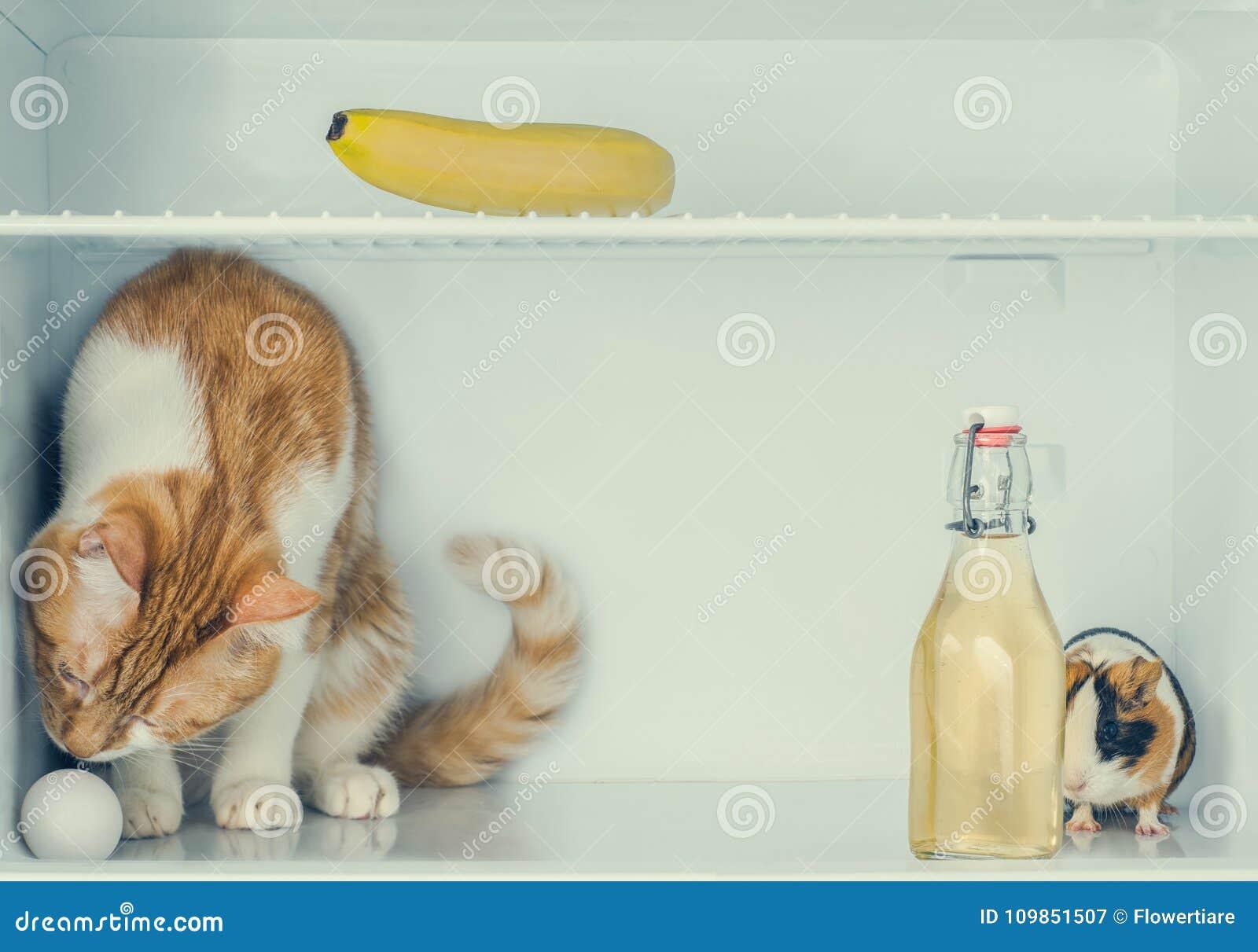 Kühlschrank Ei : Rotes kleines kätzchen das mit ei im kühlschrank mit banane und