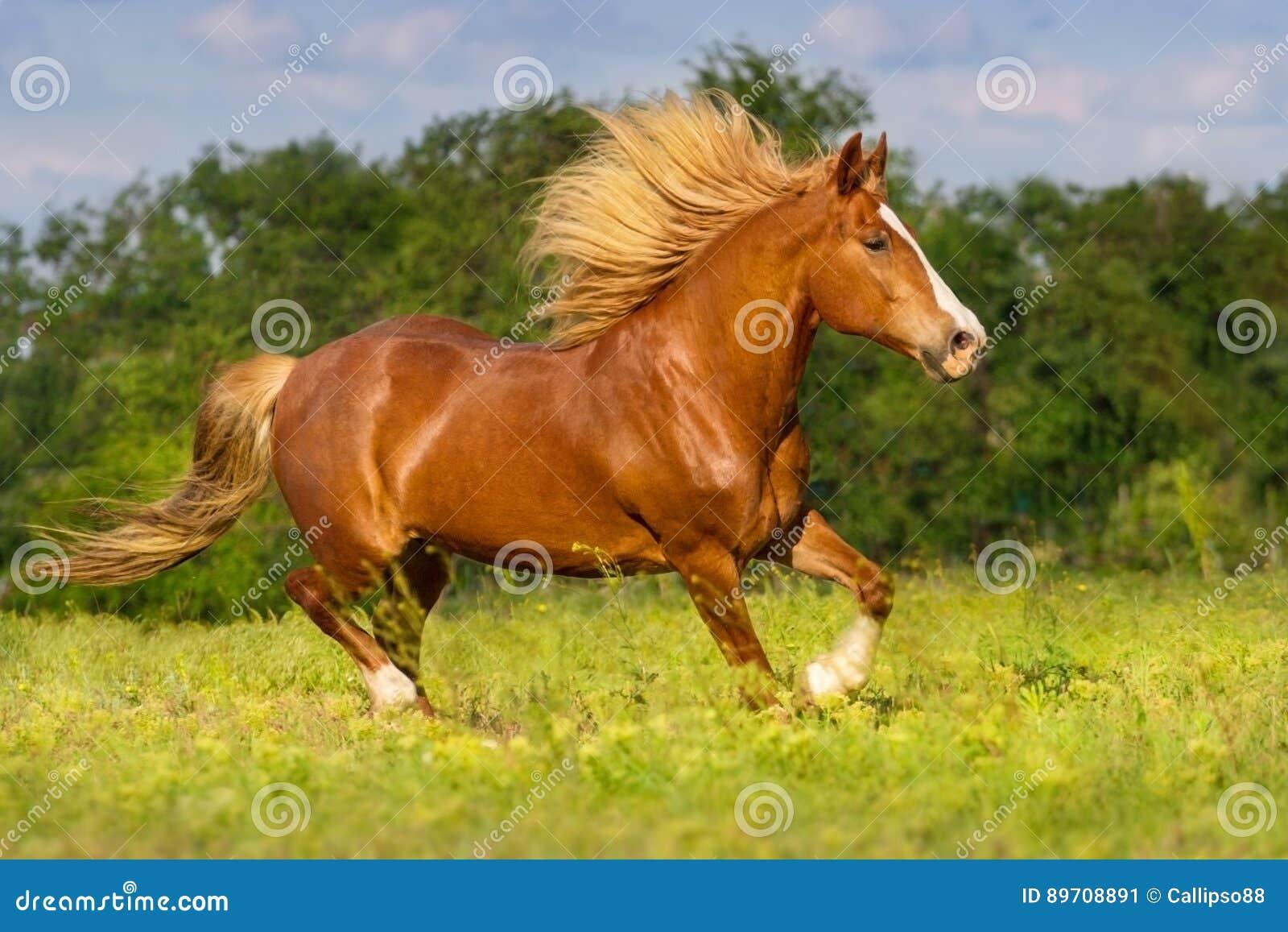 Rotes Pferd mit langem Hauptleitungslauf