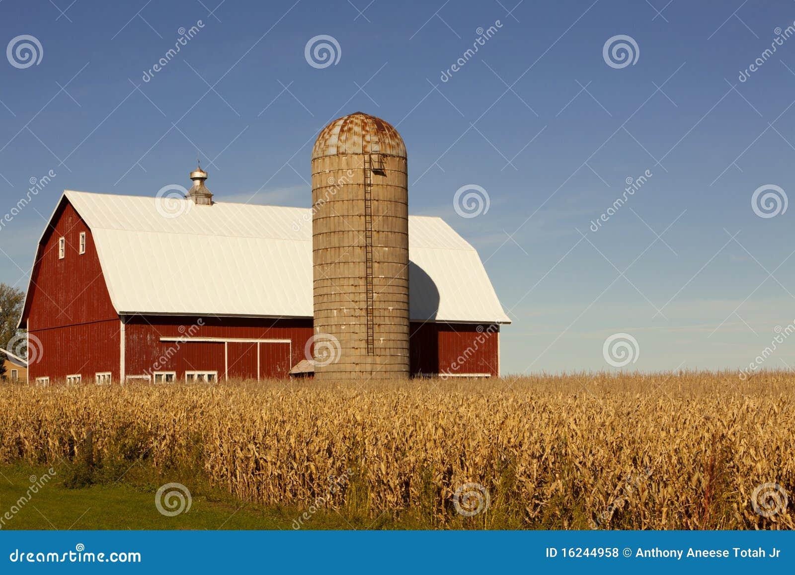 Rotes Stall-, Silo-und Mais-Feld