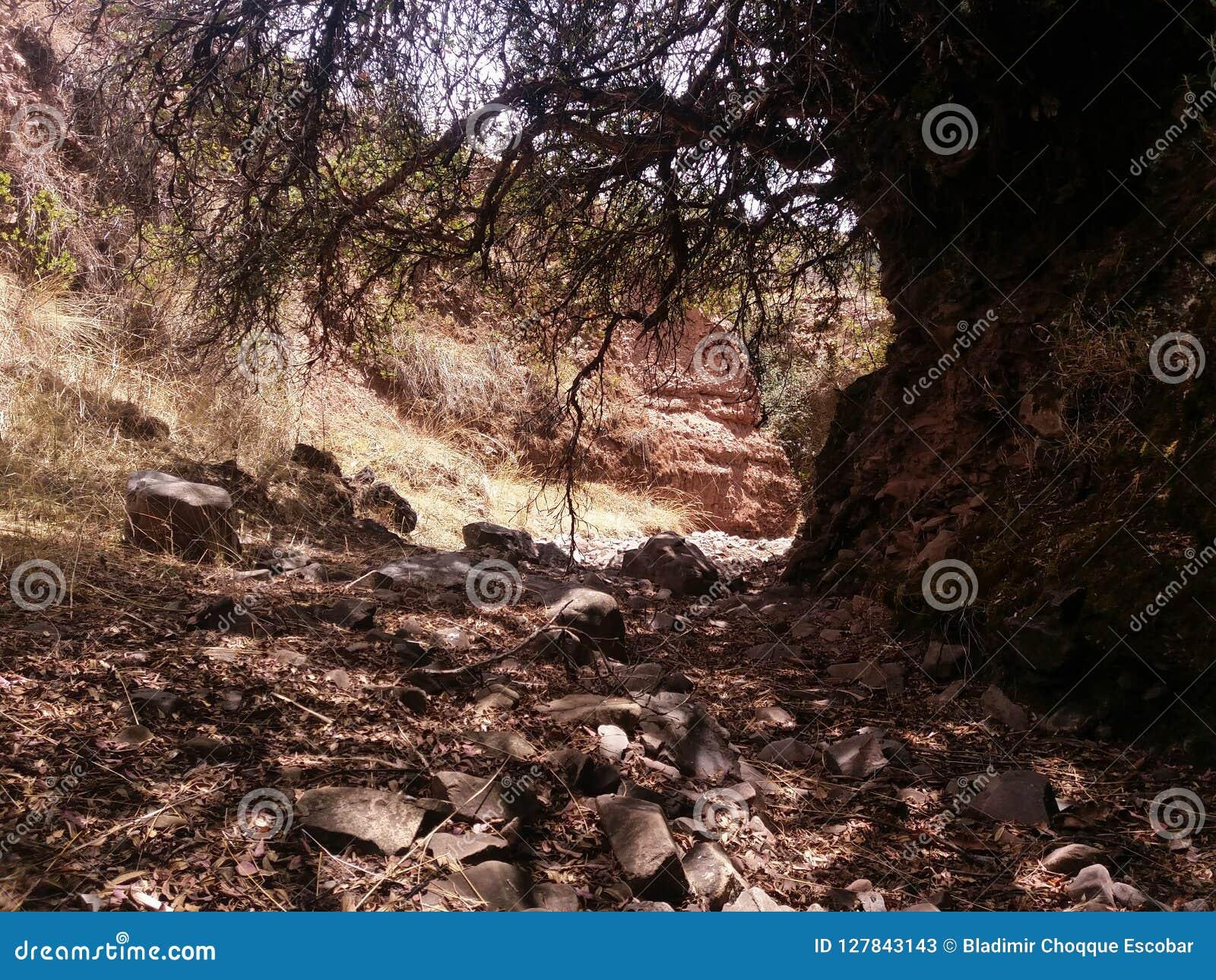 Rotsen in droge rivier