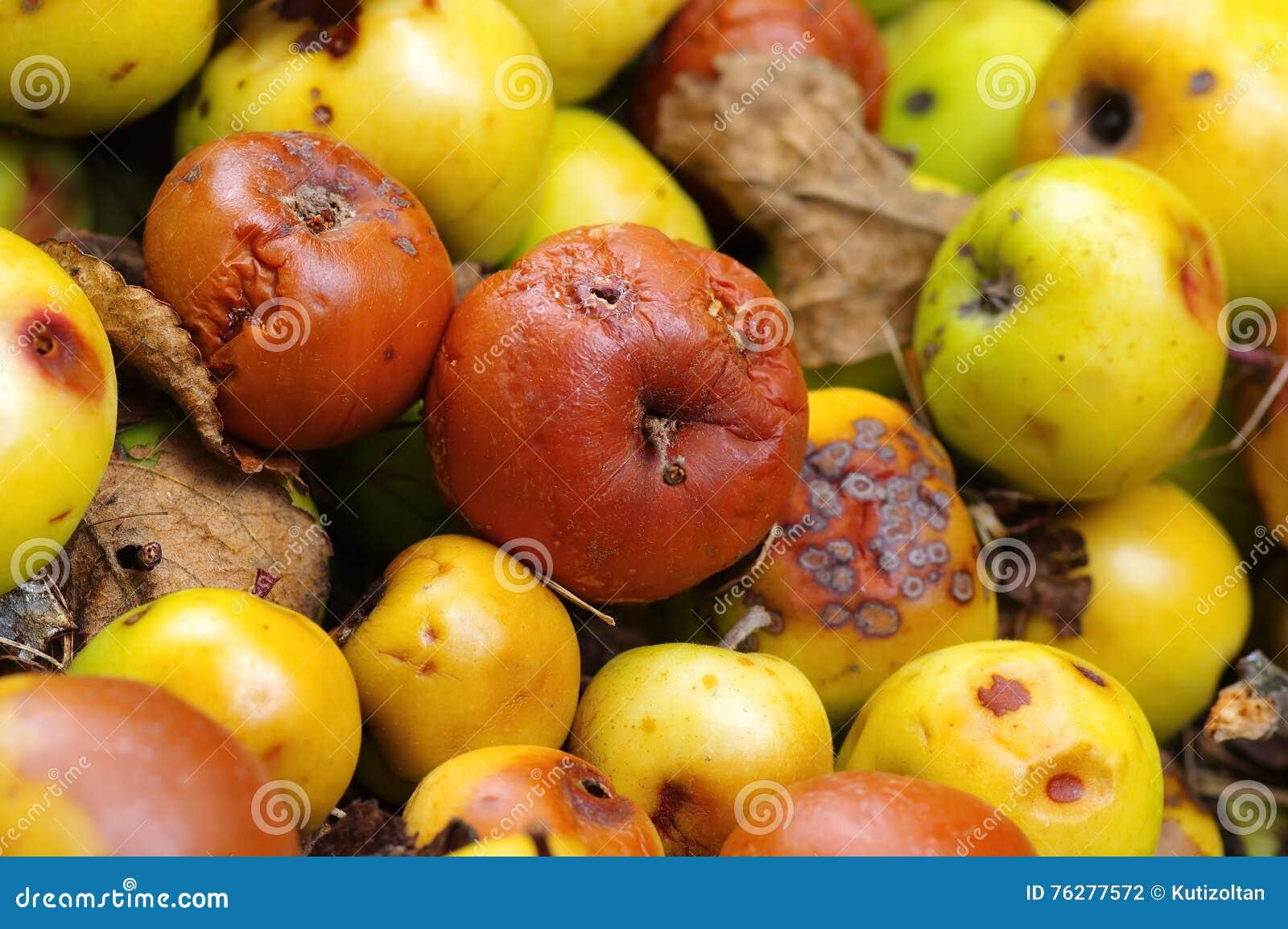 Rotte appelen
