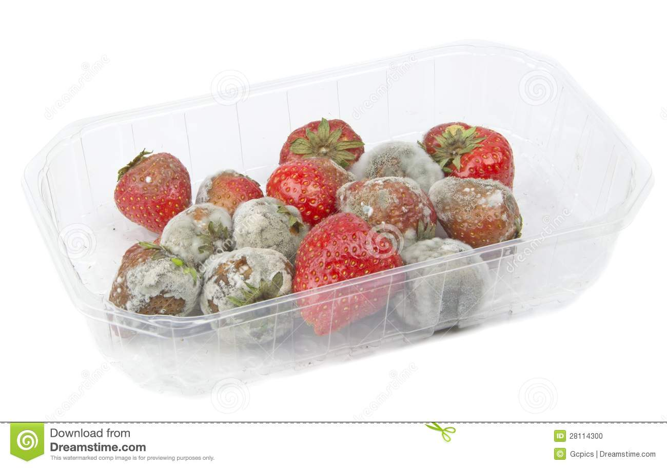 Rotten Strawberries Rotten Mouldy Strawberries