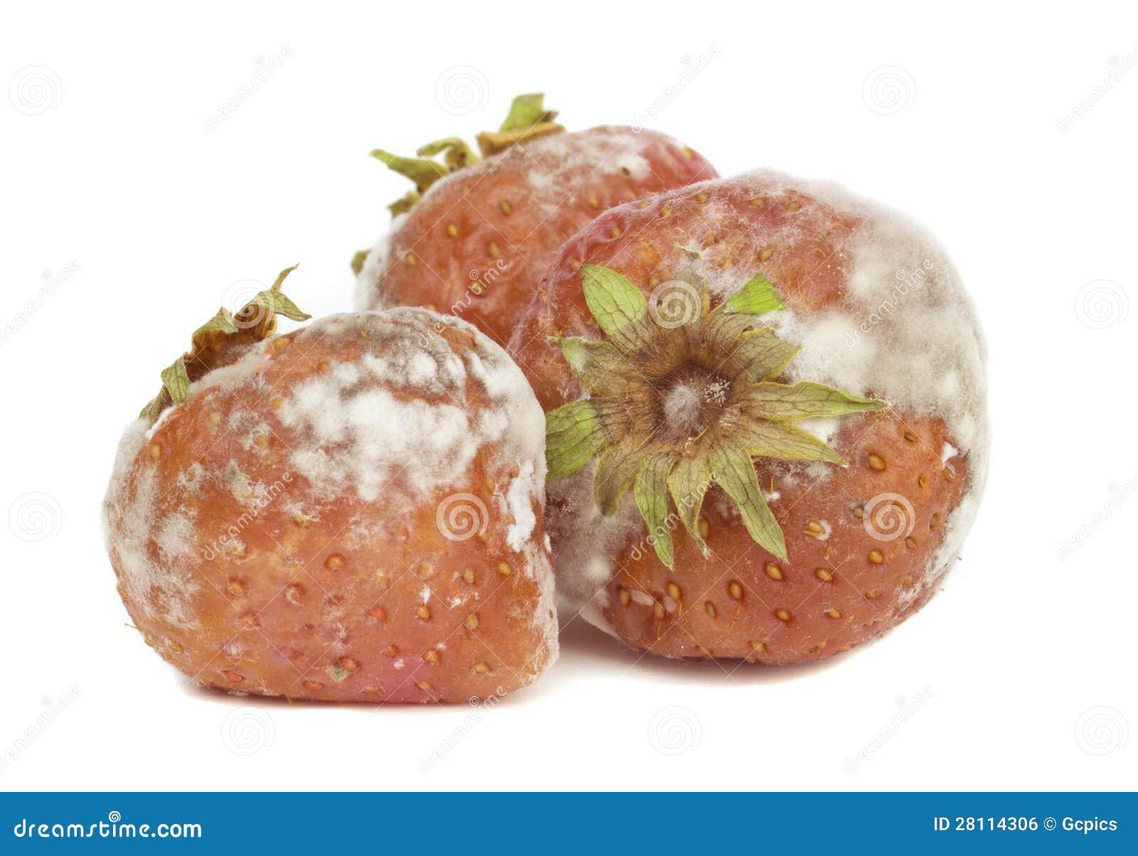 Rotten Strawberries Rotten Mouldy Strawberries