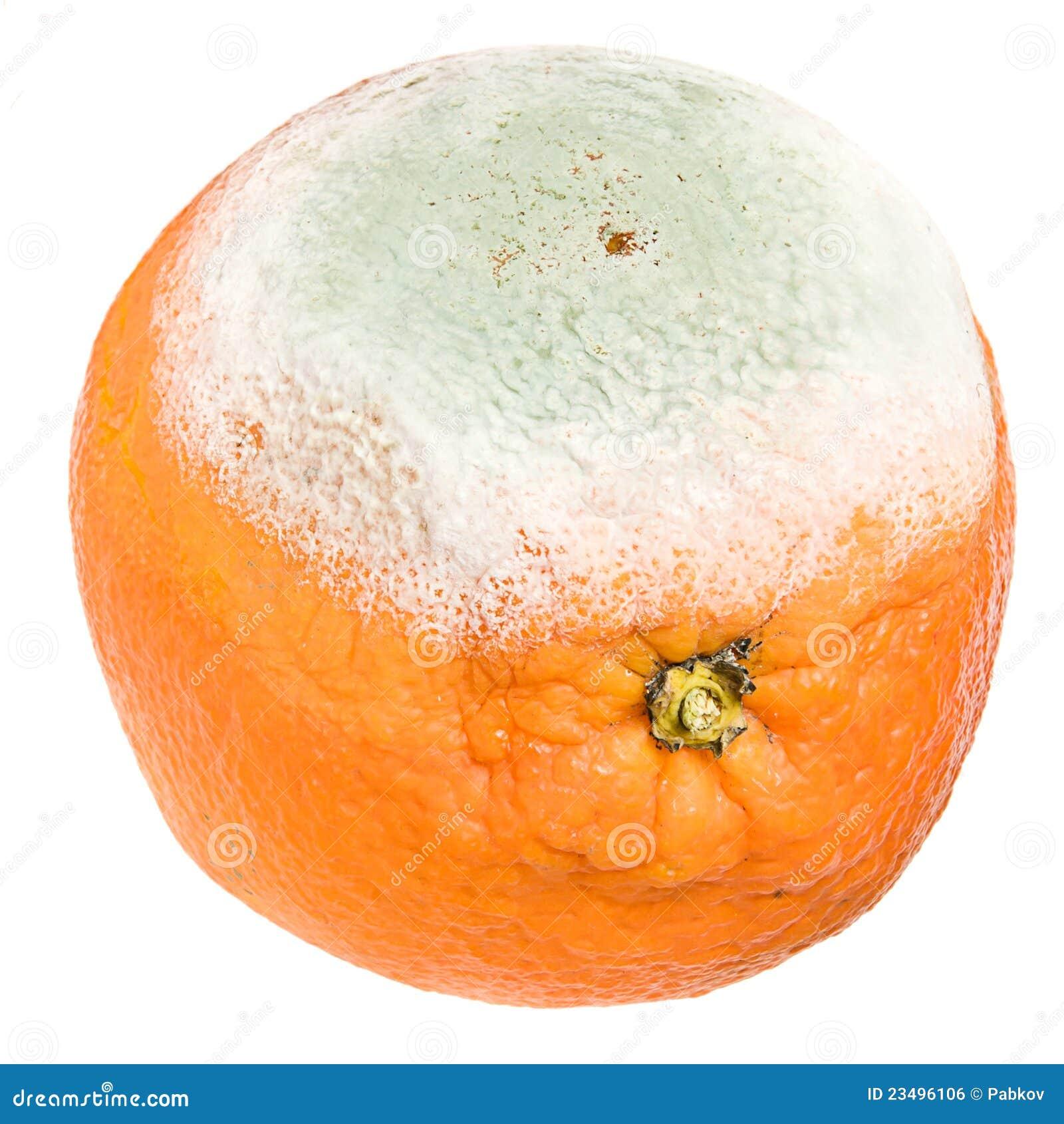 Rotten Orange Royalty Free Stock Image Image 23496106