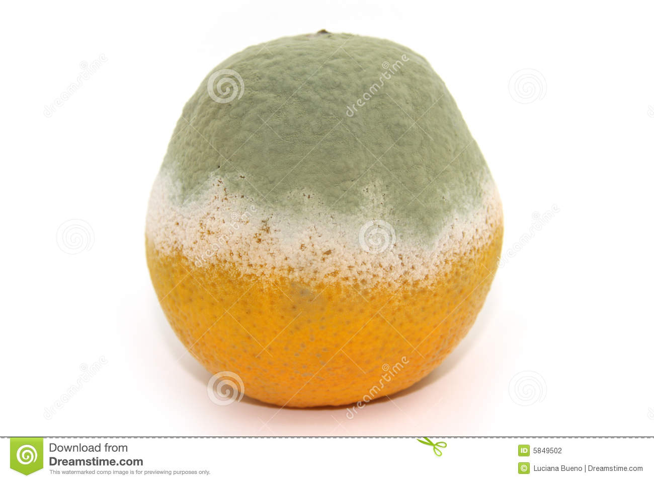 Rotten Orange Stock Photography - Image: 5849502