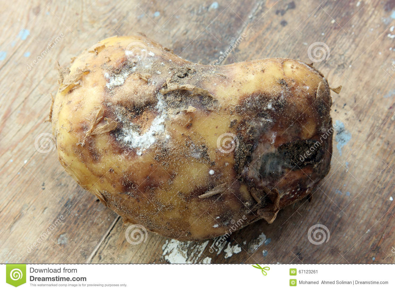 Image result for a rotten potato