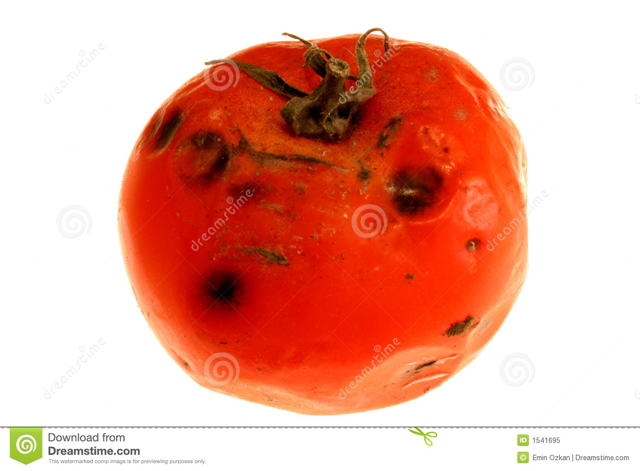 Rotten Tomato 2 Royalty Free Stock Photo - Image: 1541695