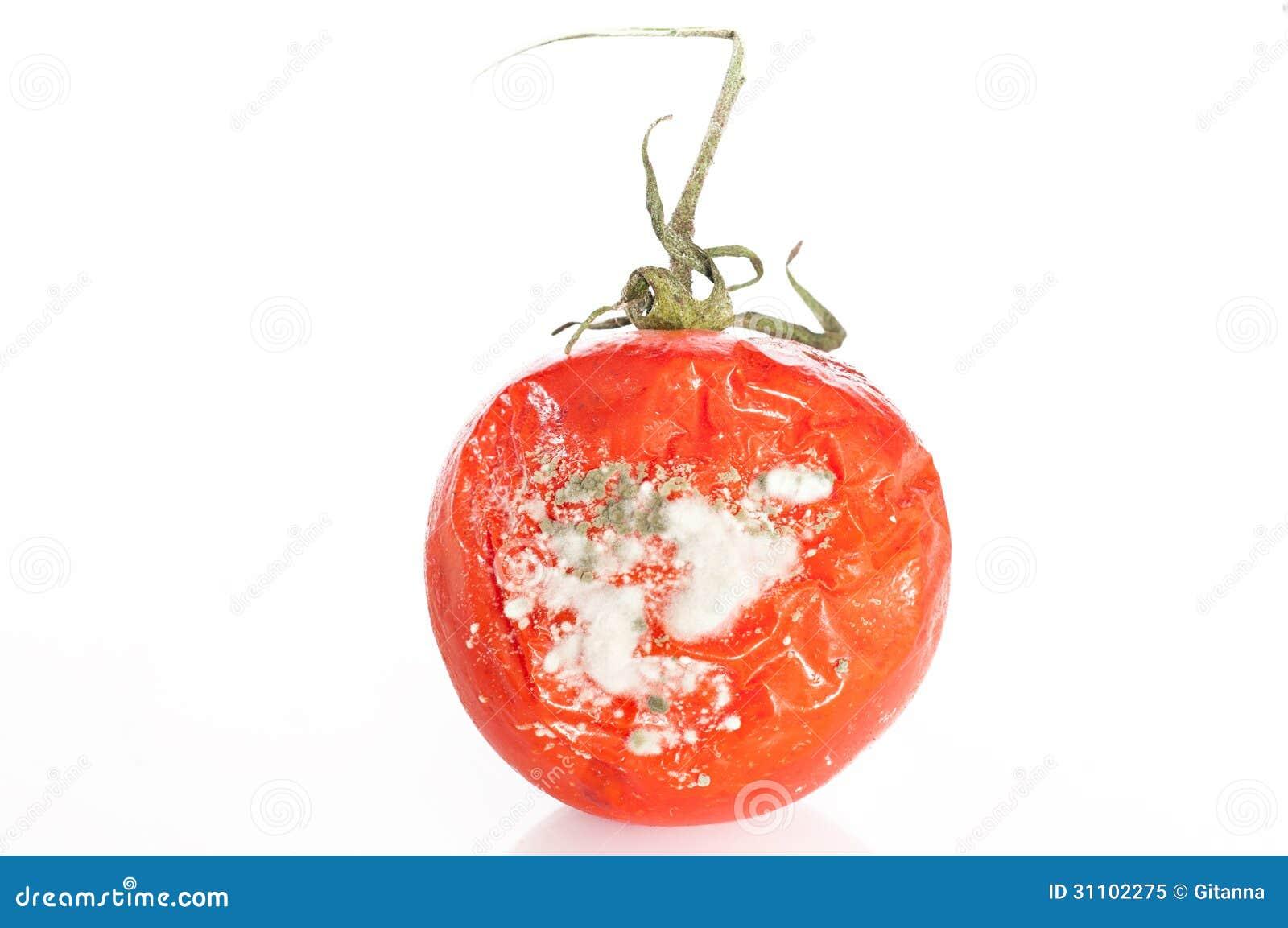 Rotten Tomatoe Stock Image Image Of Molder Orange Plant