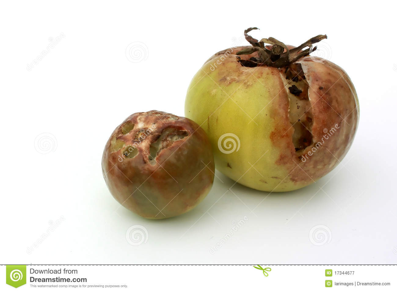 Rotten tomatoes stock image image of brown food single 17344677 download rotten tomatoes stock image image of brown food single 17344677 ccuart Choice Image