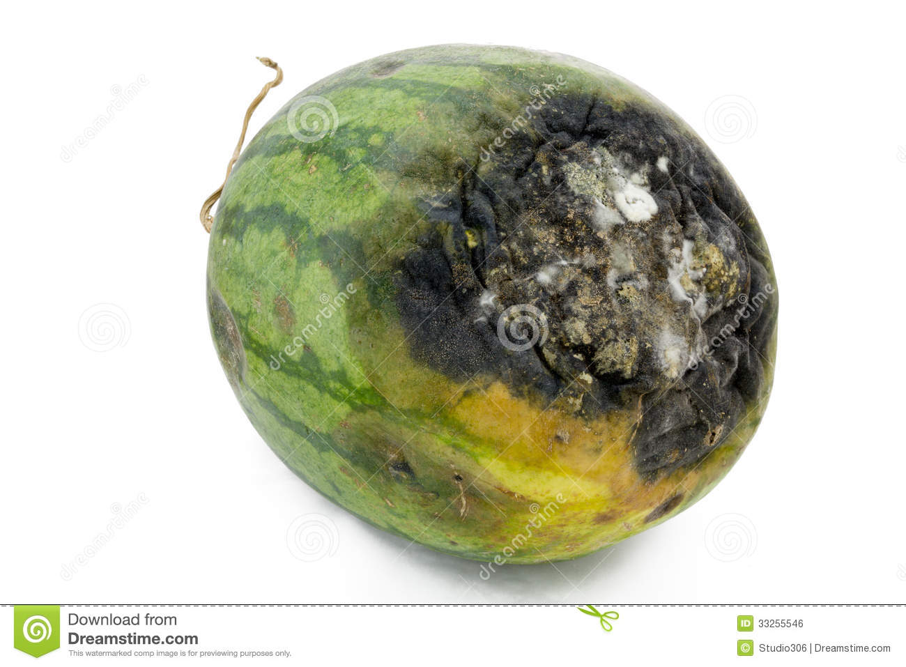 Rotten Watermelon. Royalty Free Stock Image - Image: 33255546