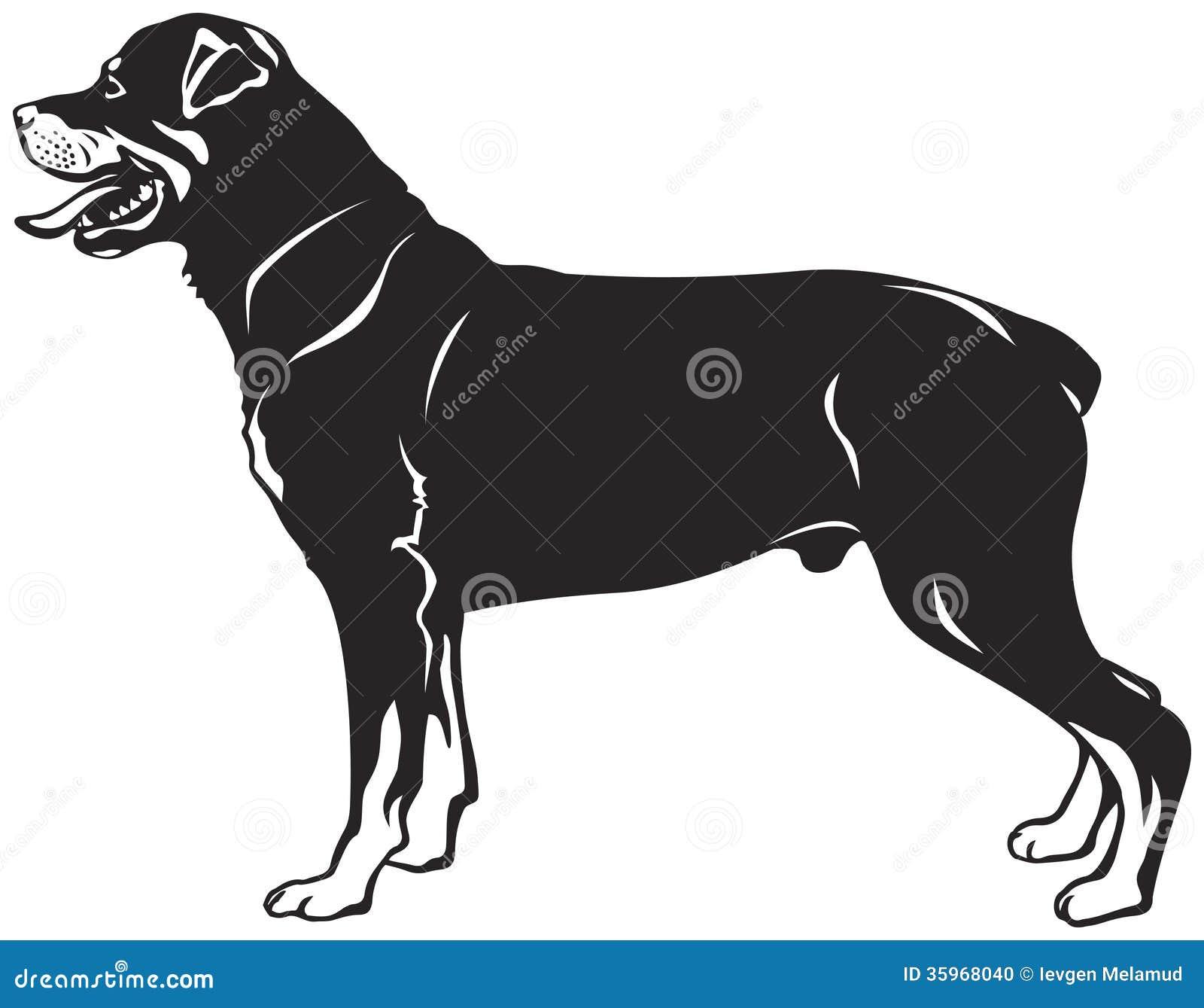 Rottweiler Dog Breed Stock Photo Image 35968040