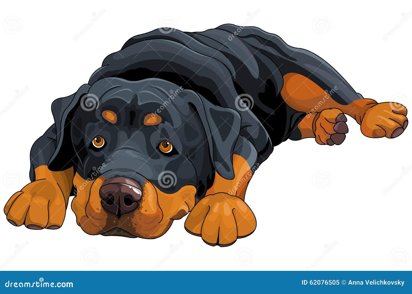 rottweiler cartoons illustrations amp vector stock images