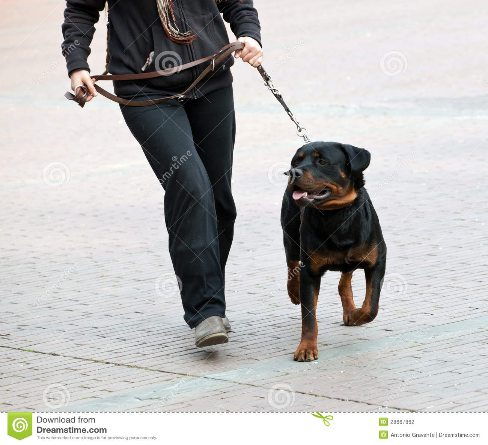 Rottweiler single master