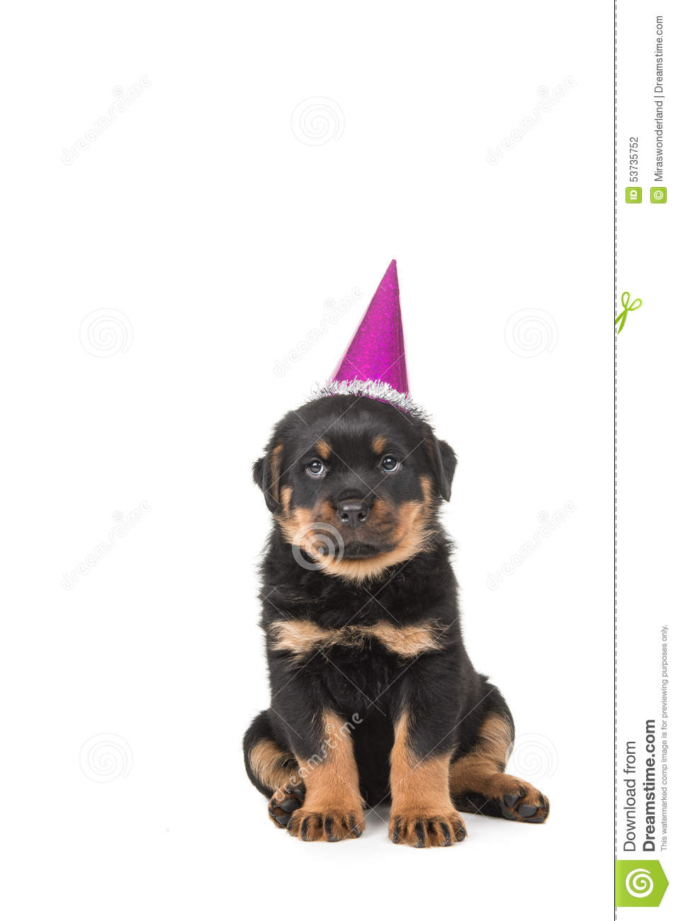 rottweiler puppy happy birthday stock photo image 53735752 puppy dog clipart black and white puppy dog pals clipart
