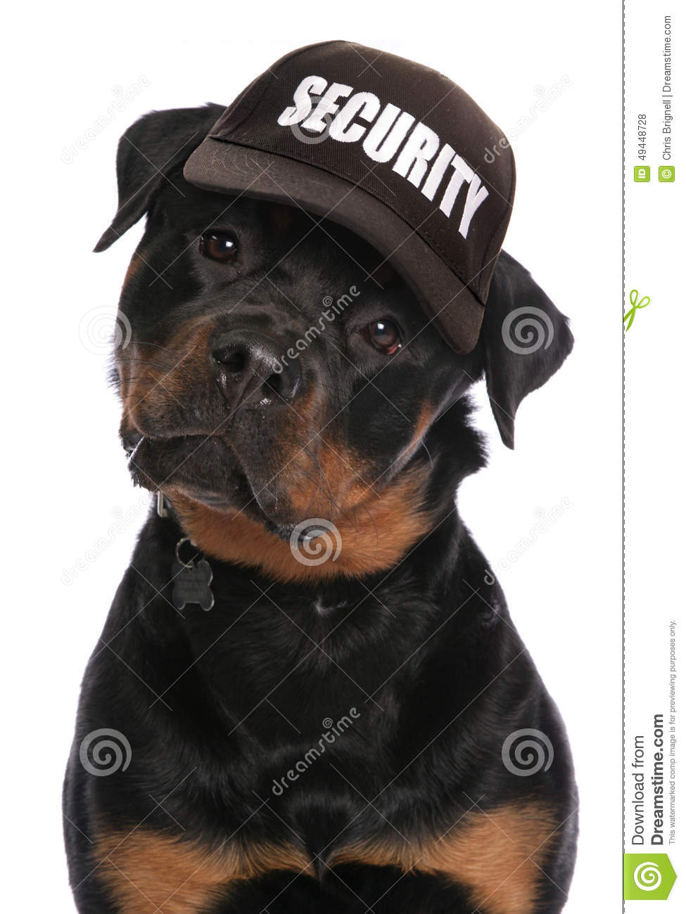 Rottweiler Security Stock Photo Image 49448728