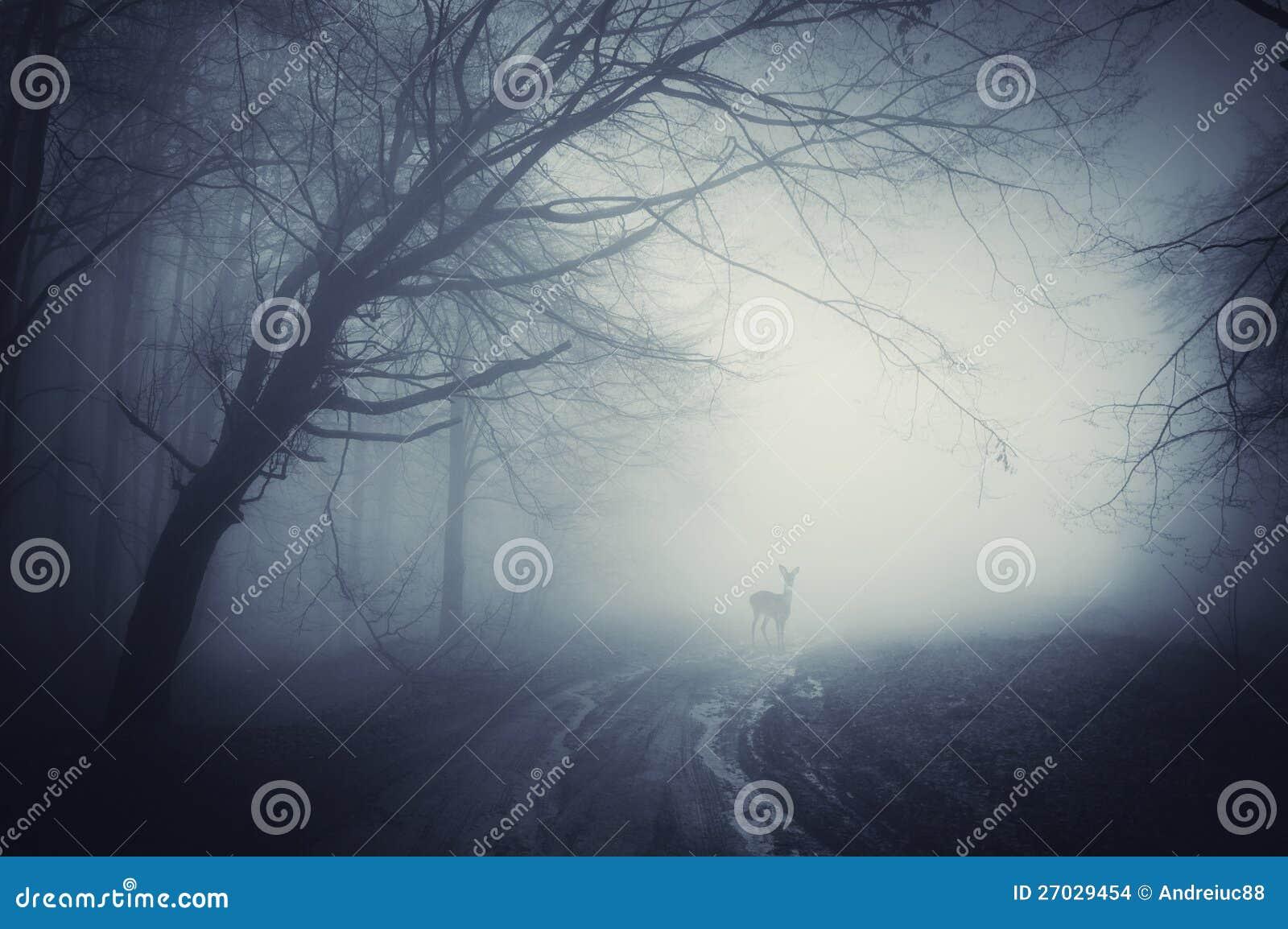 Rotwild auf einer Straße in einem dunklen Wald nach Regen