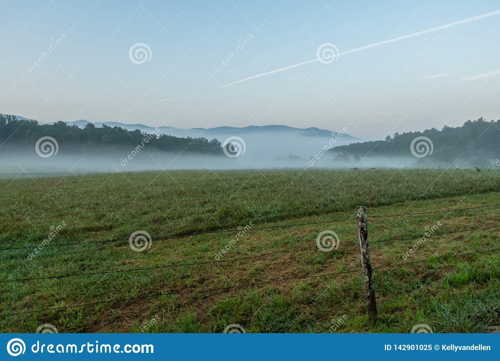 Rotwild Graze In Morning Fog
