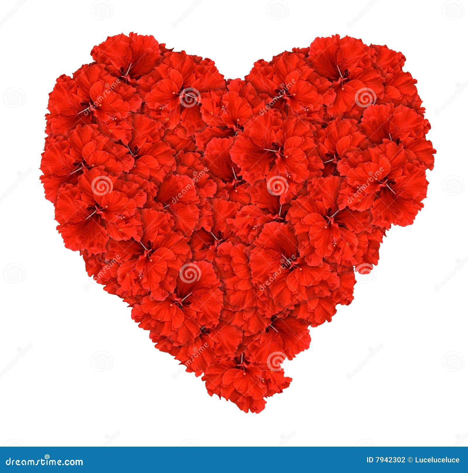 rouge d 39 amour d 39 isolement par hibsicus de coeur de fleur photo stock image 7942302. Black Bedroom Furniture Sets. Home Design Ideas