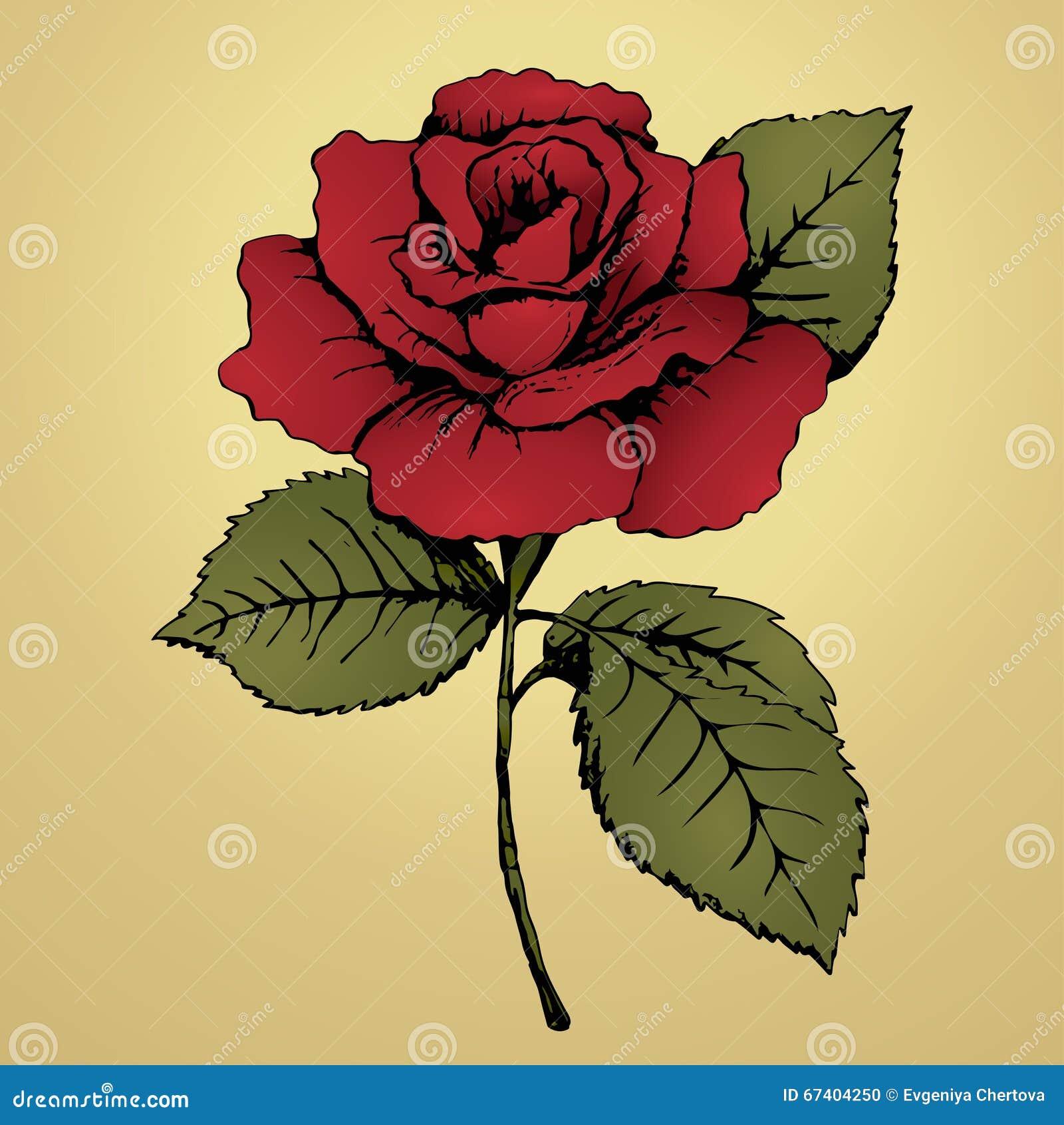 rouge rose de fleur retrait de main bourgeonnez, les pétales, les