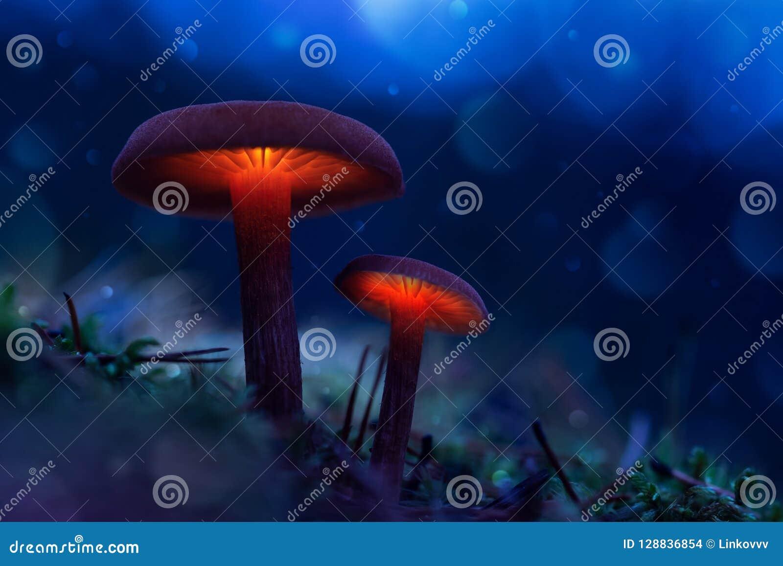 Rougeoyer répand dans une forêt de féerie le monde magique du champignon
