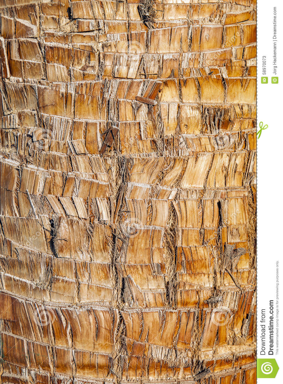 Rough Texture Background: Rough Brown Palm Tree Wood Bark Natural Texture Background