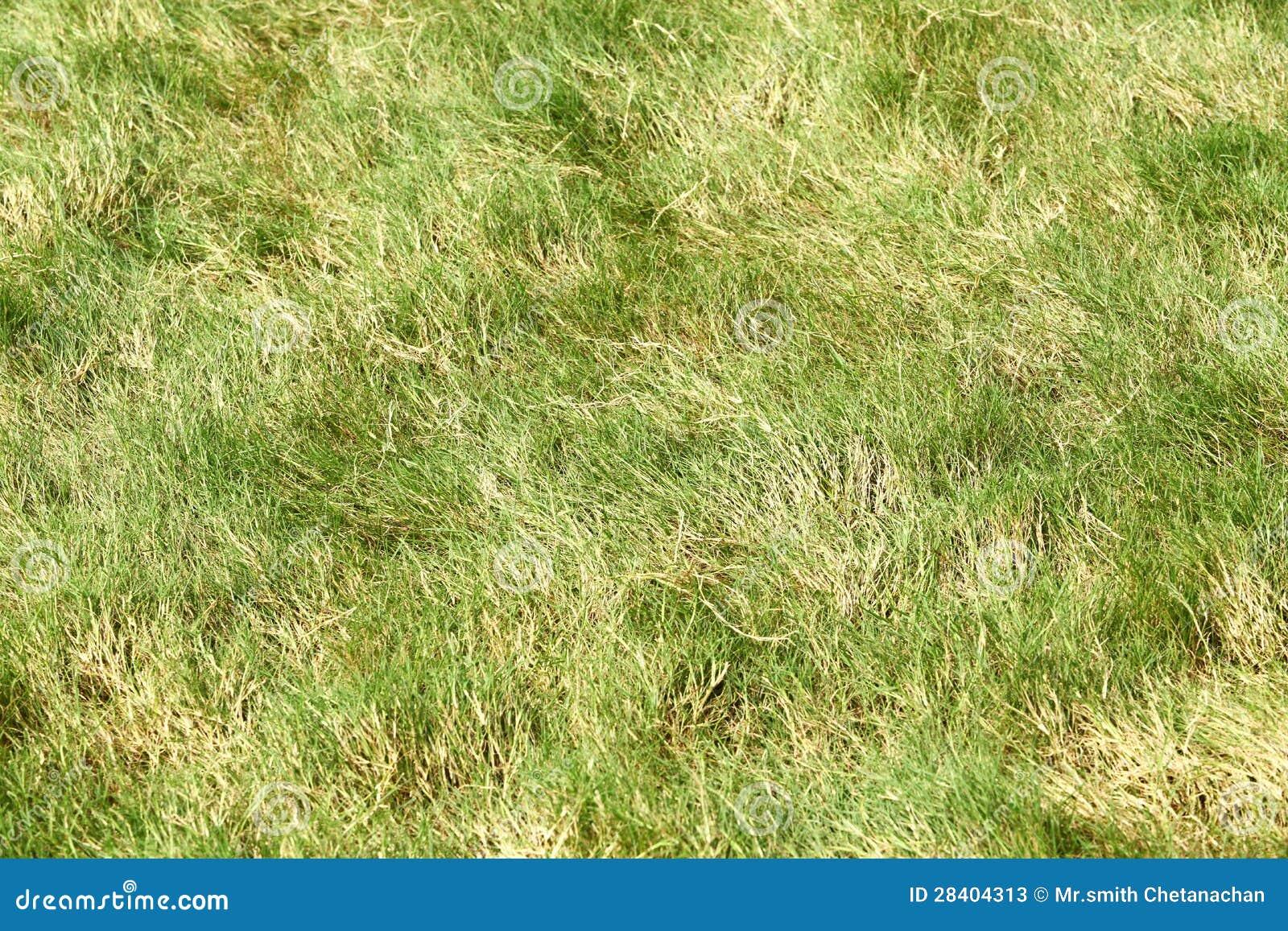 Rough Grass Stock Photos Image 28404313