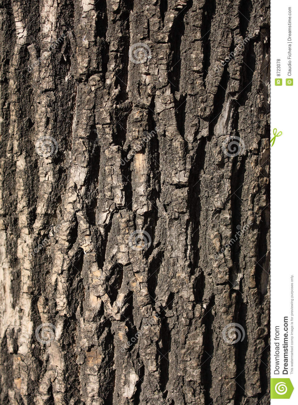 A Rough Guide To Types Of Scientific Evidence: Rough Texture Of Tree Stock Photo. Image Of Rough, Tree