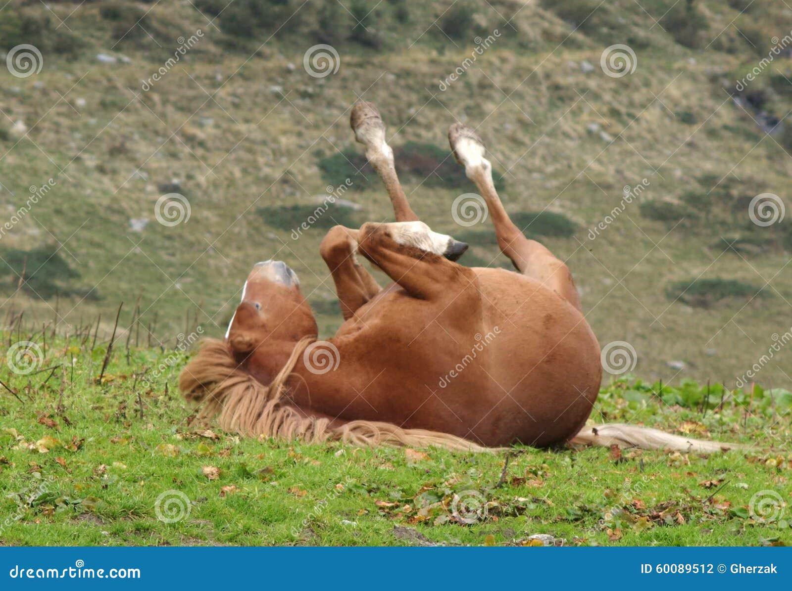 Roulement de cheval dans l herbe