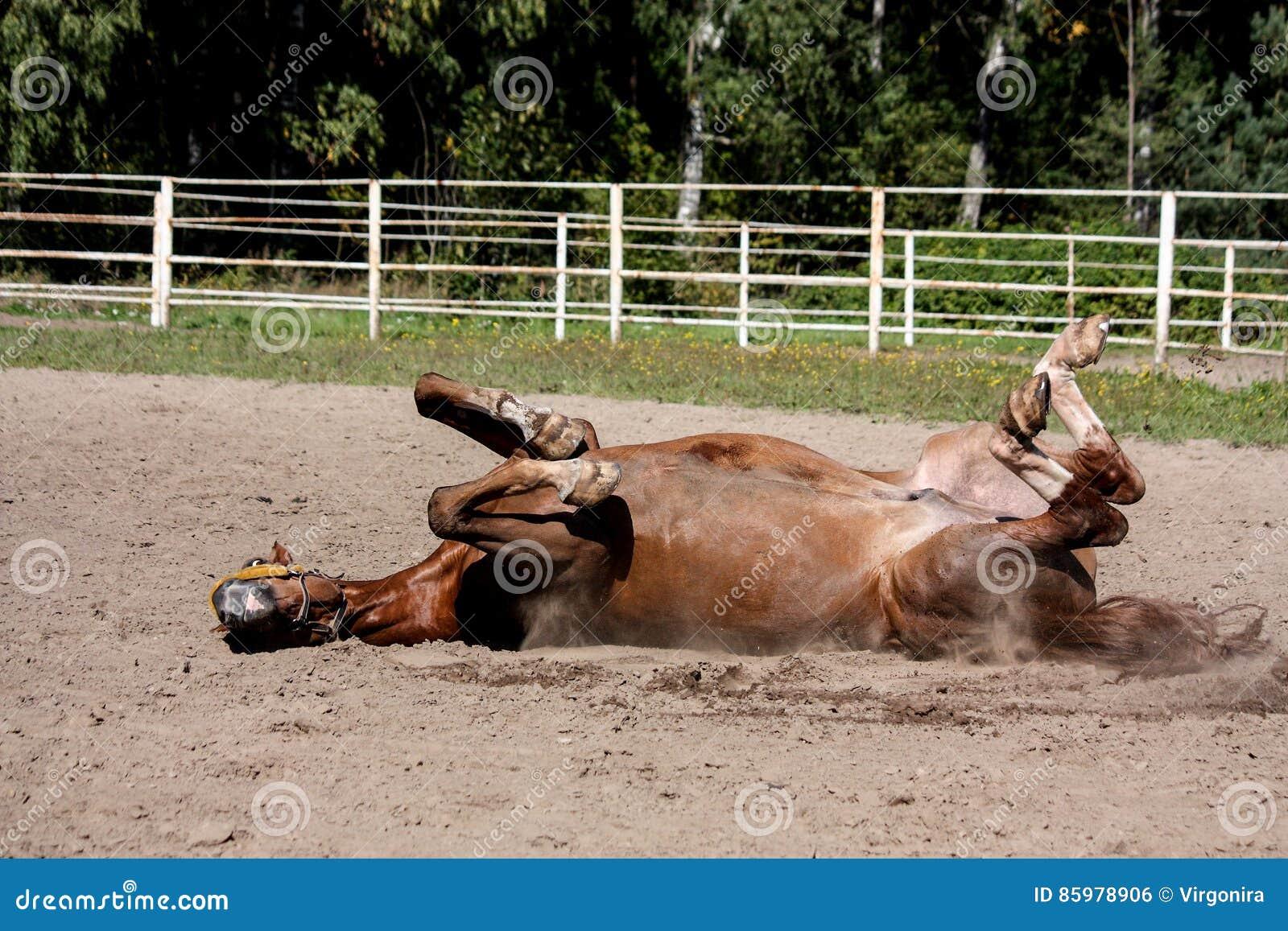 Roulement de cheval de châtaigne dans le sable