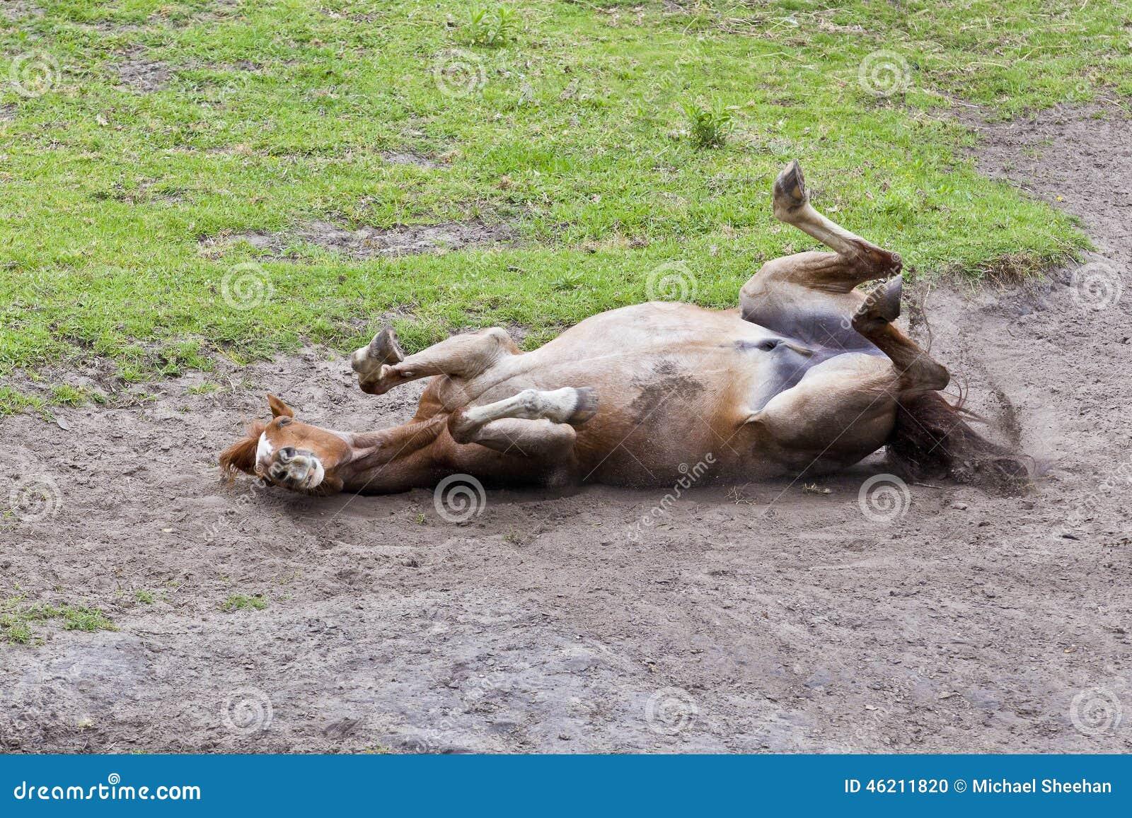 Roulement de cheval en sable