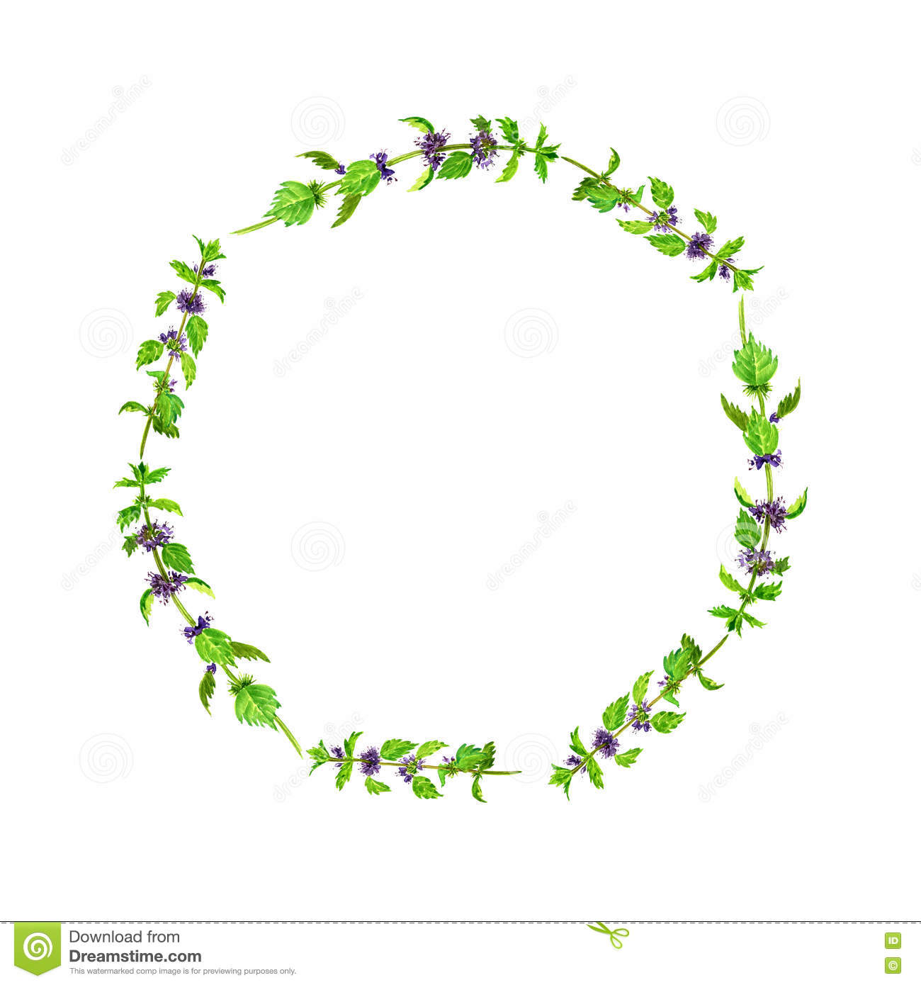 round frame with watercolor drawing plants of mint stock christmas holly leaves clipart holly leaves clip art black and white free