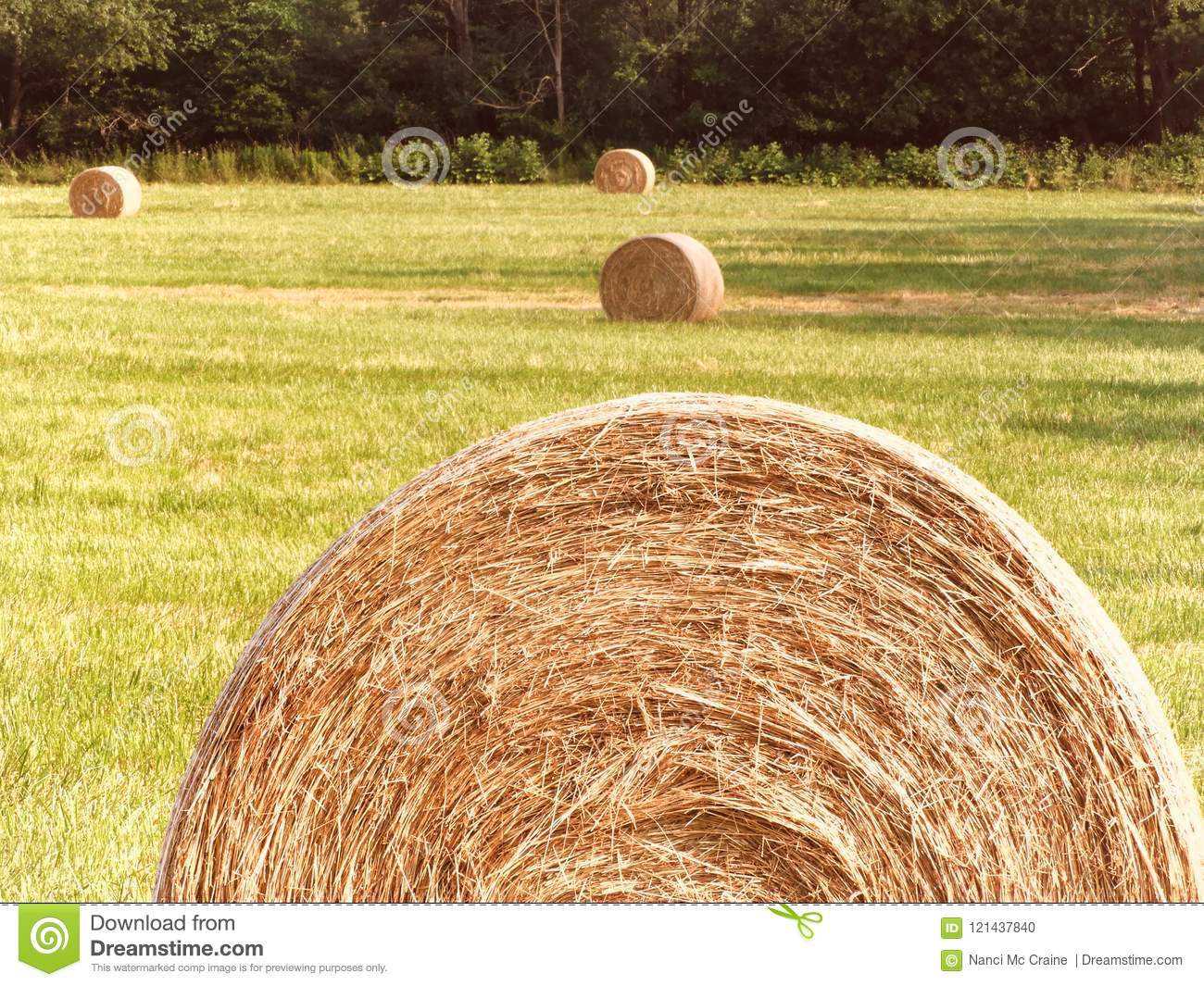 Round Hay Bales Sit In Newly Cut Hay Field In FingerLakes