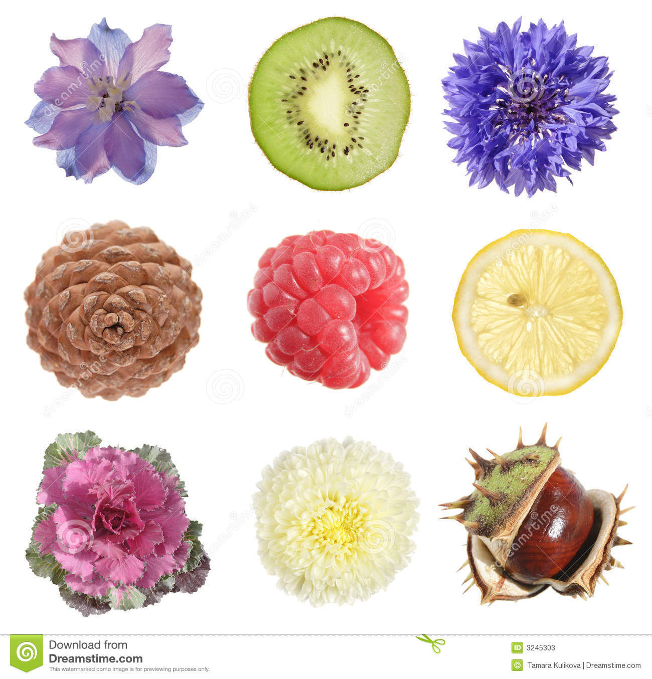 Round Objects Collection Stock Photos - Image: 3245303
