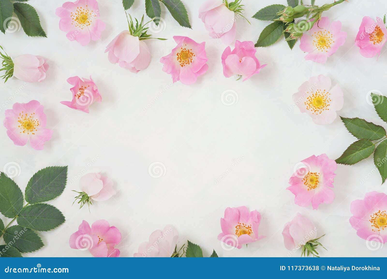 Round ramowy wianku wzór z różami, różowymi kwiatów pączkami, gałąź i liśćmi odizolowywającymi na białym tle, Mieszkanie nieatuto
