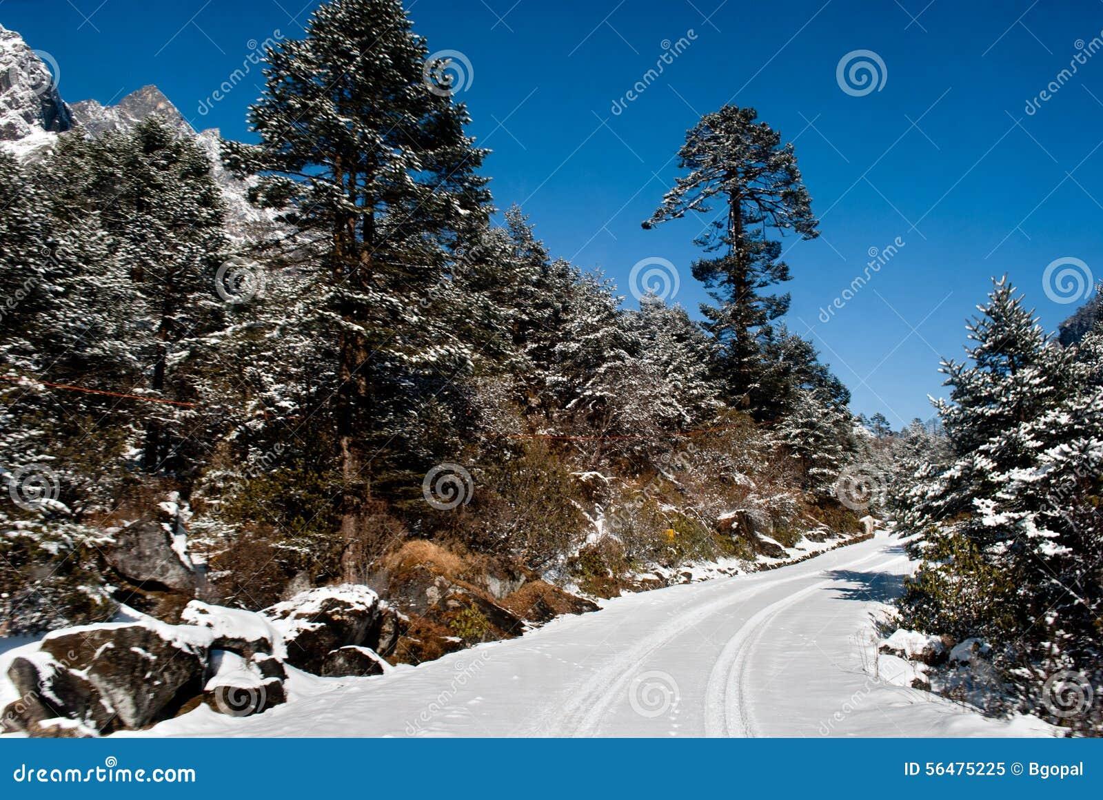Route à la vallée de Yumthang