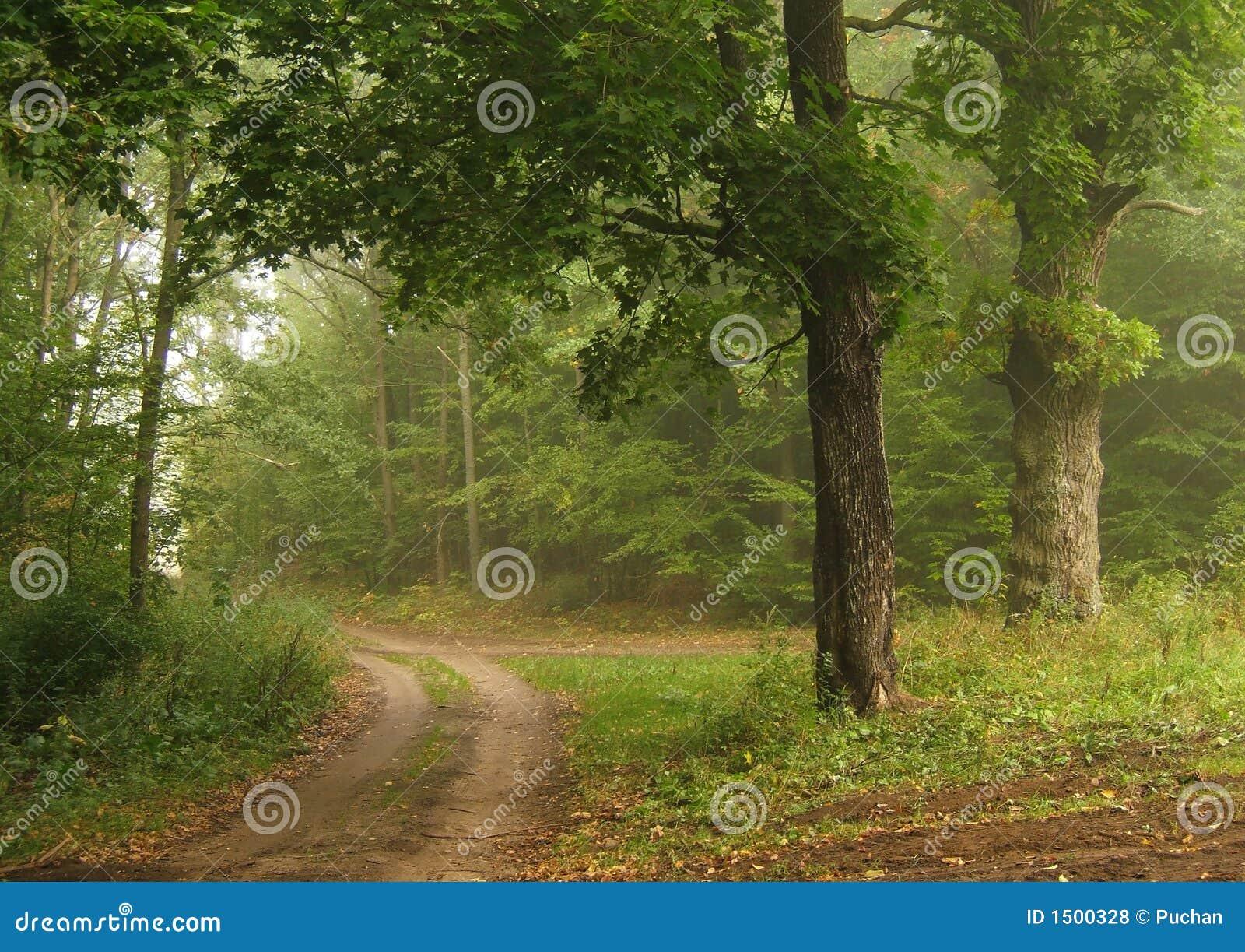 Route brumeuse d automne
