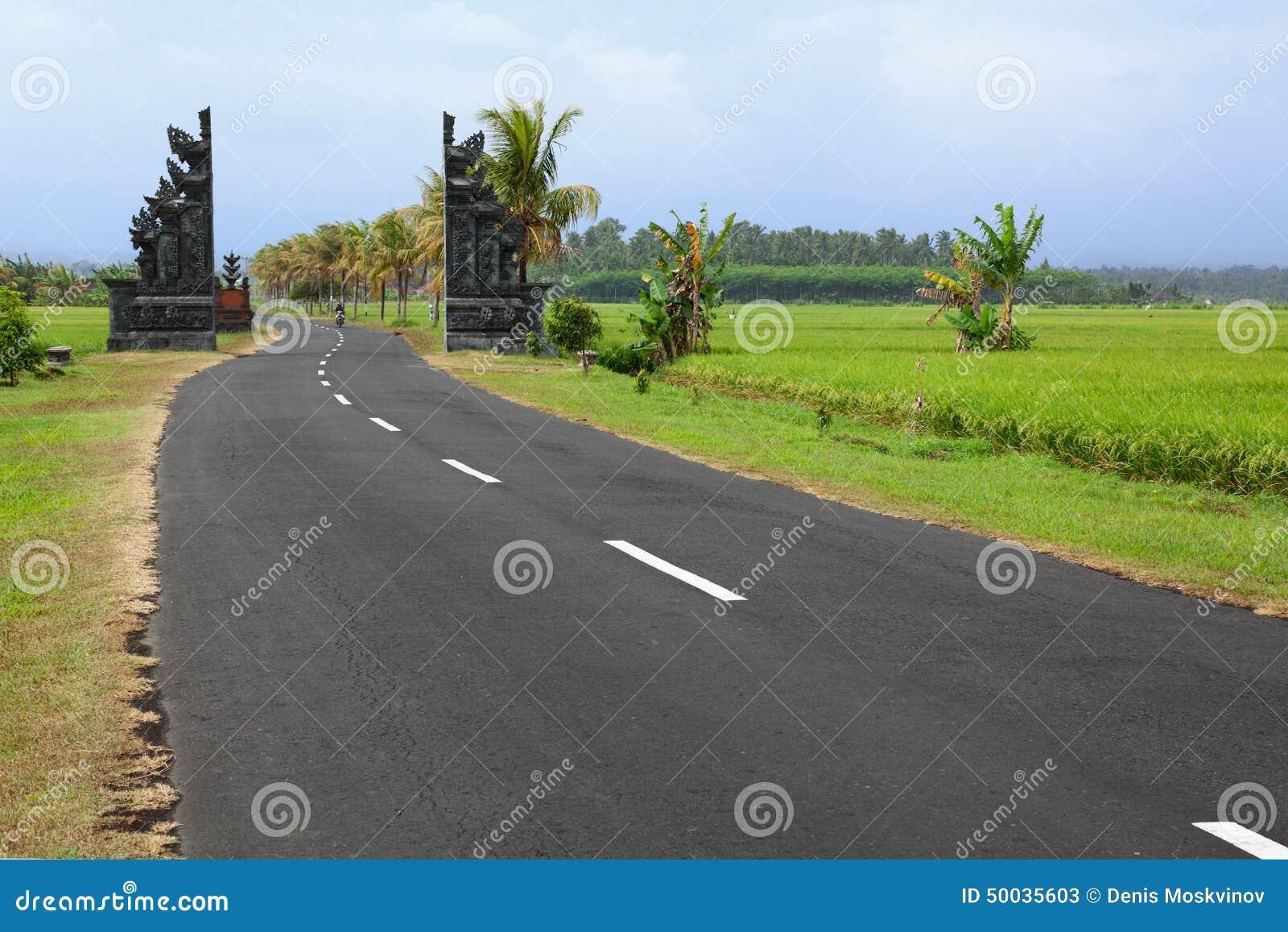 Route dans les domaines de riz