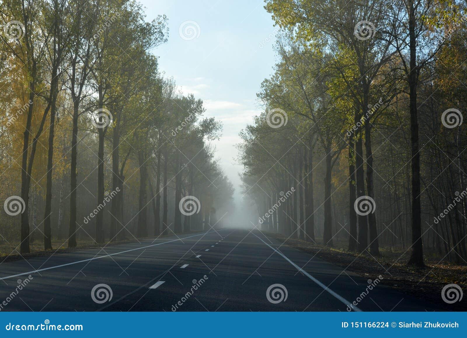 Route dans un matin brumeux