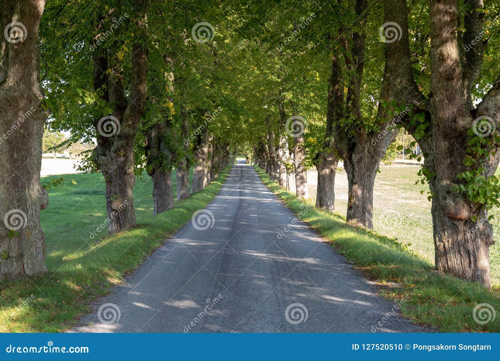 Route de campagne, arbre rayé