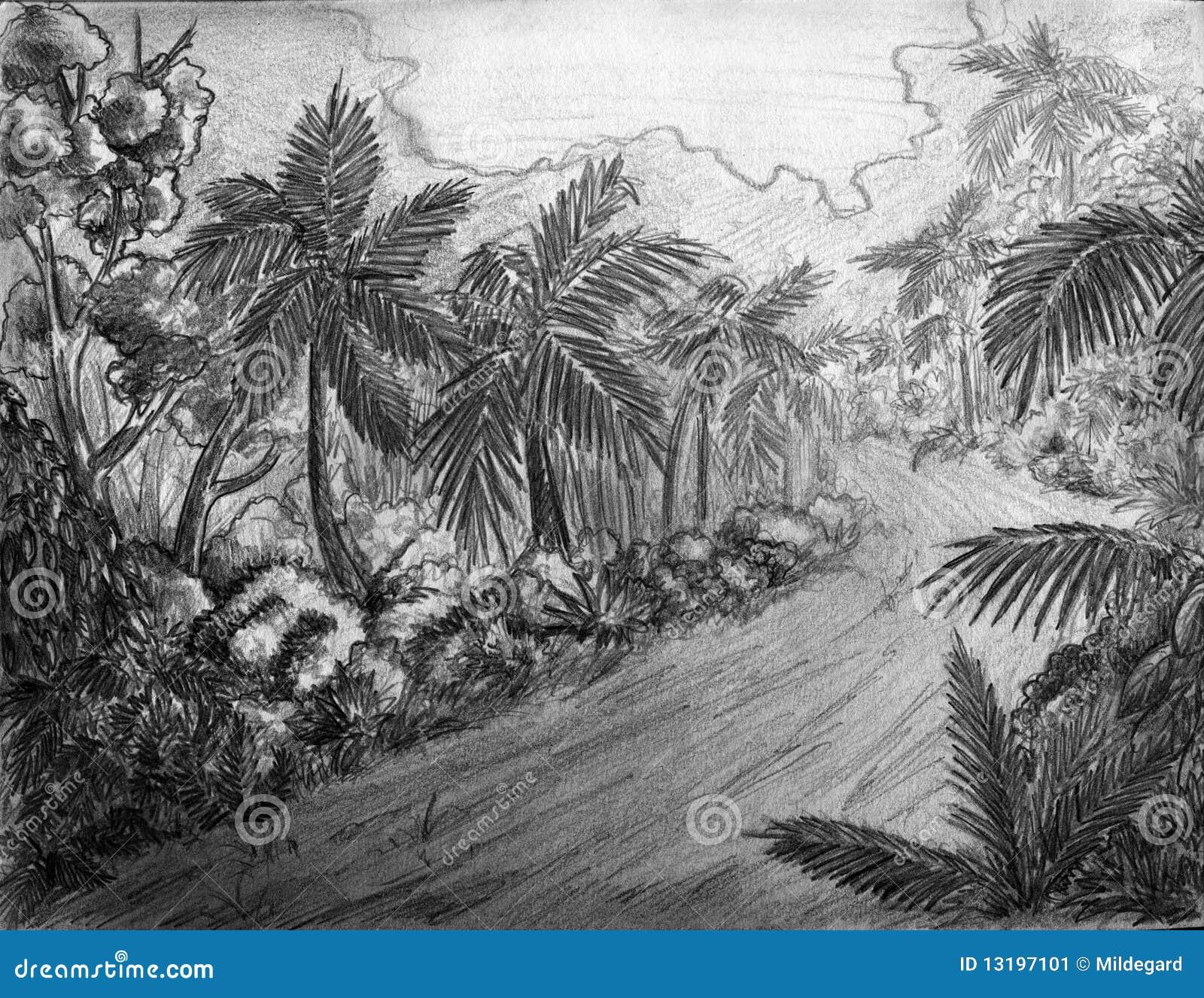 Route De Jungle Illustration Stock Illustration Du