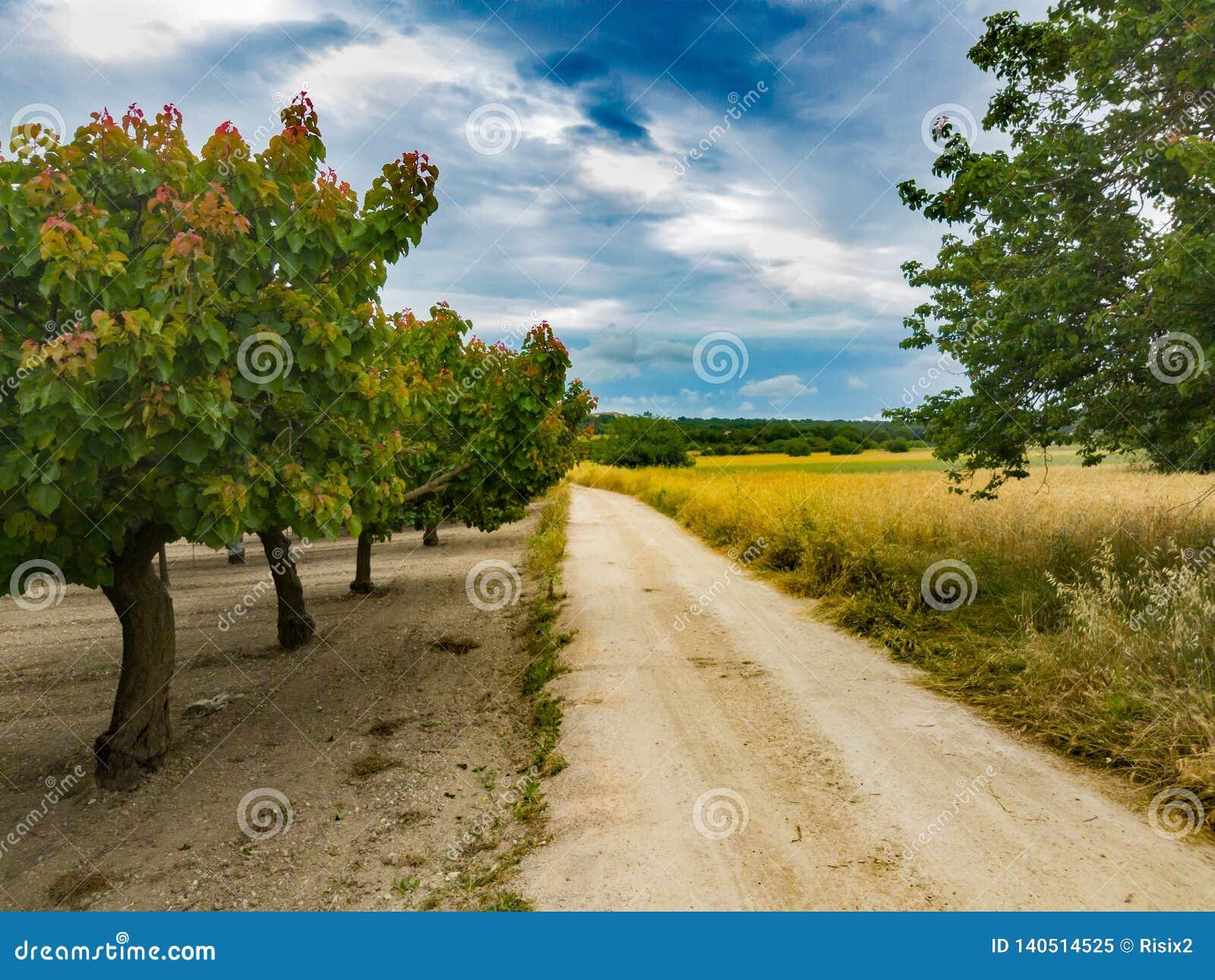 Route entre les arbres fruitiers