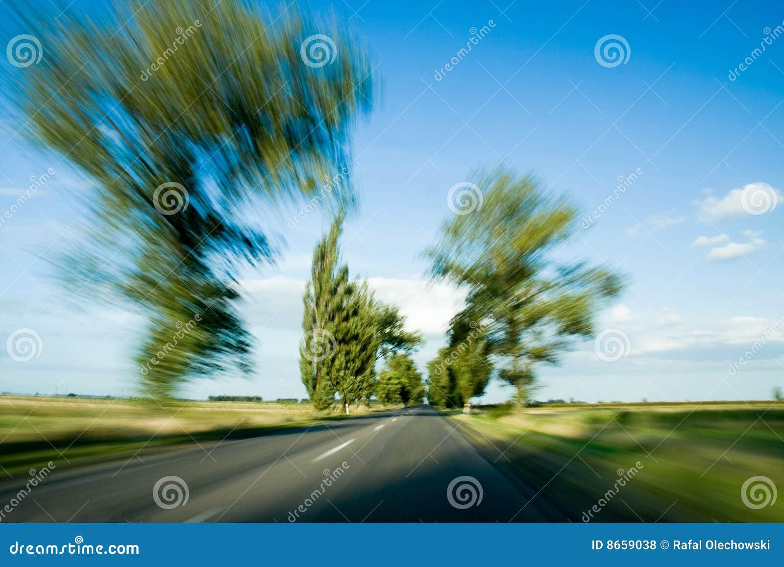 Route et arbres avec la tache floue de mouvement