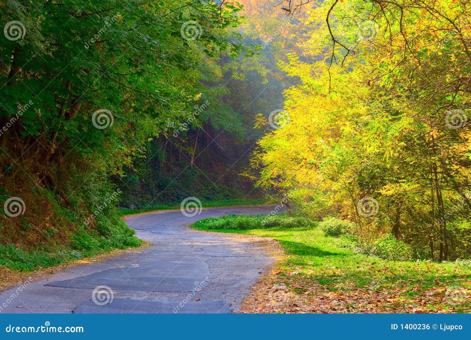 Route incurvée dans la forêt