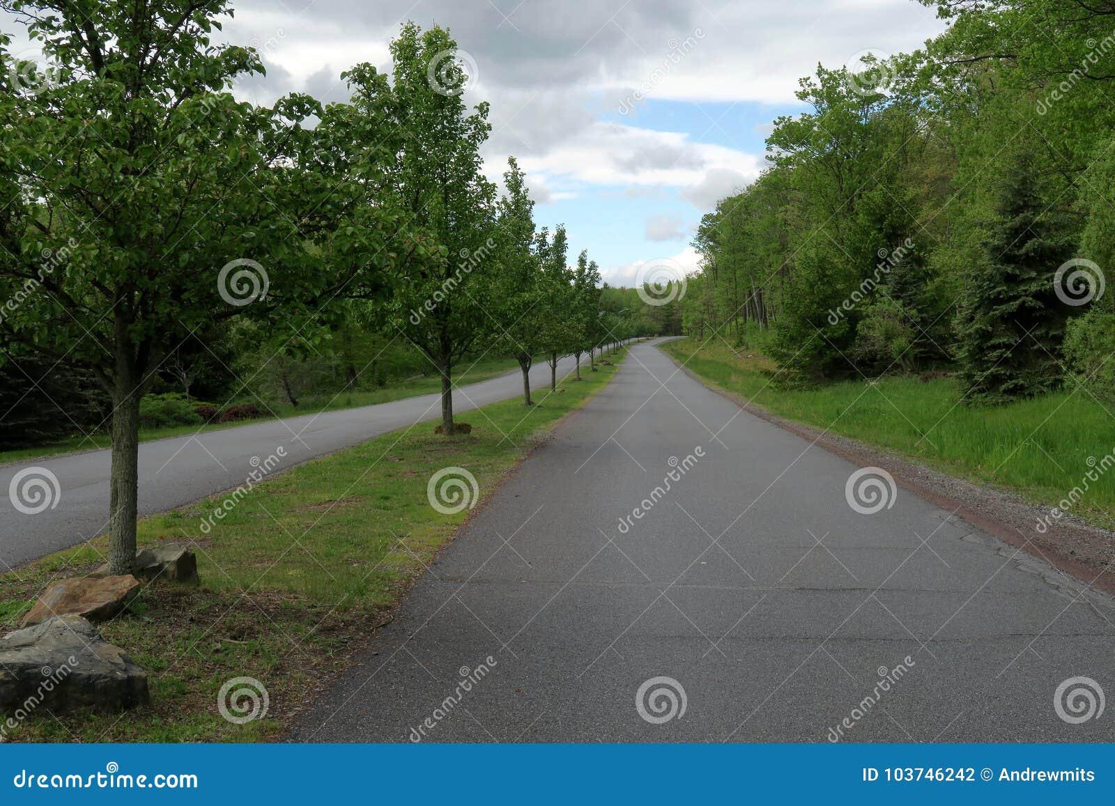 Route rayée par arbre rural avec les ruelles séparées
