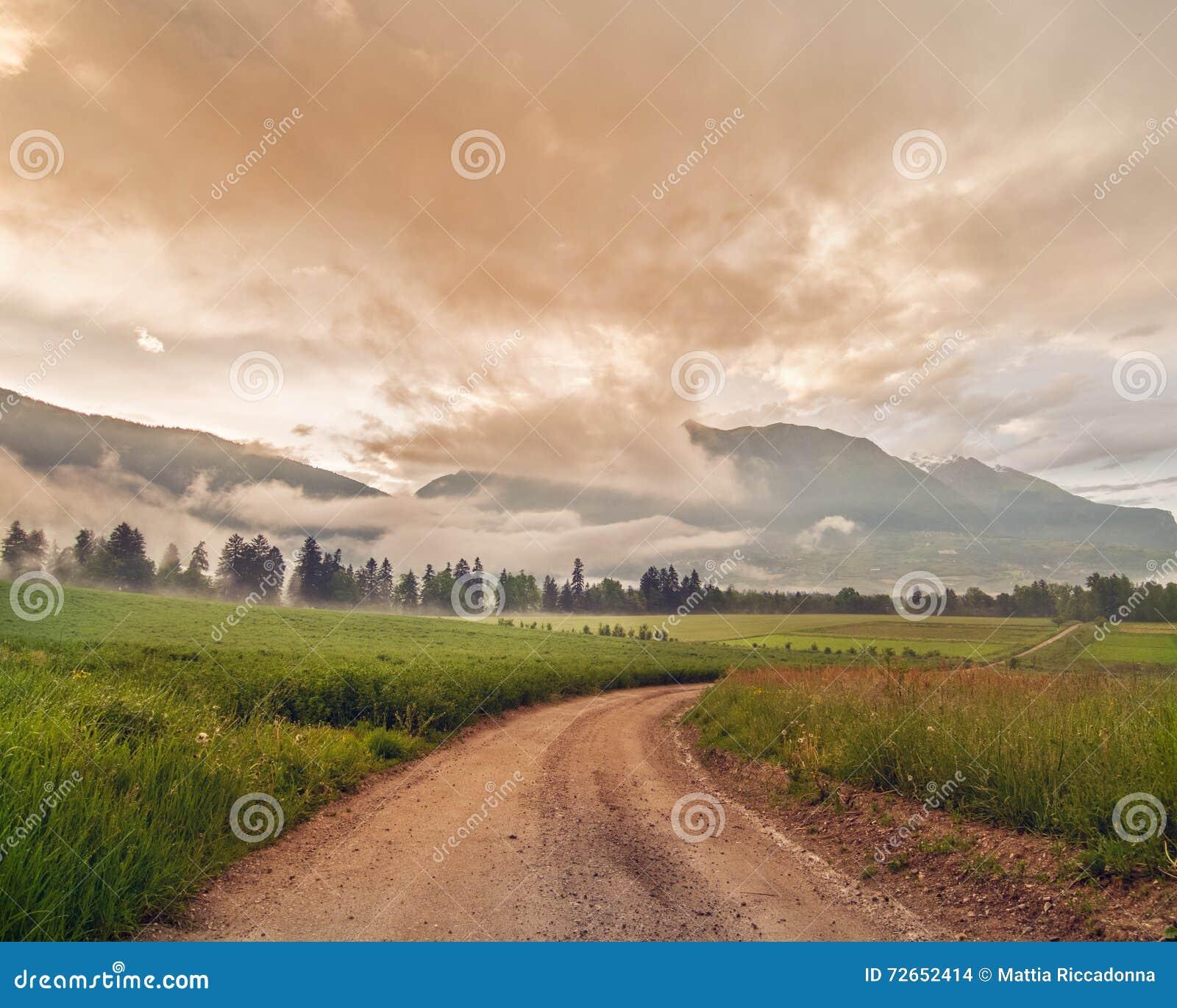 Route rurale au milieu d 39 un champ vert de culture avec les nuages beautuful photo stock image - Culture haricot vert plein champ ...